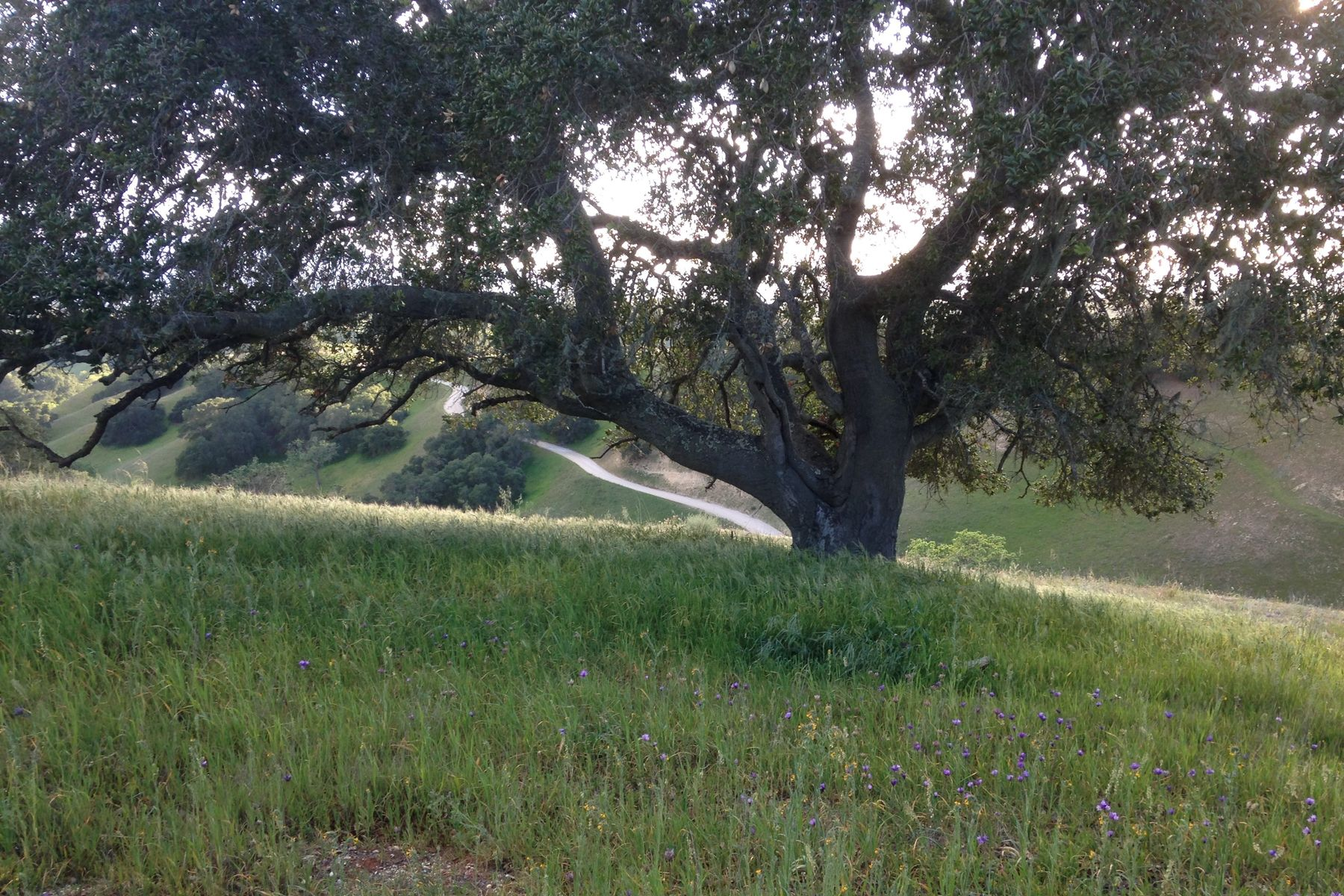 Land for Sale at Woodstock Ranch Opportunity 3353 Long Valley Road Santa Ynez, California 93460 United States