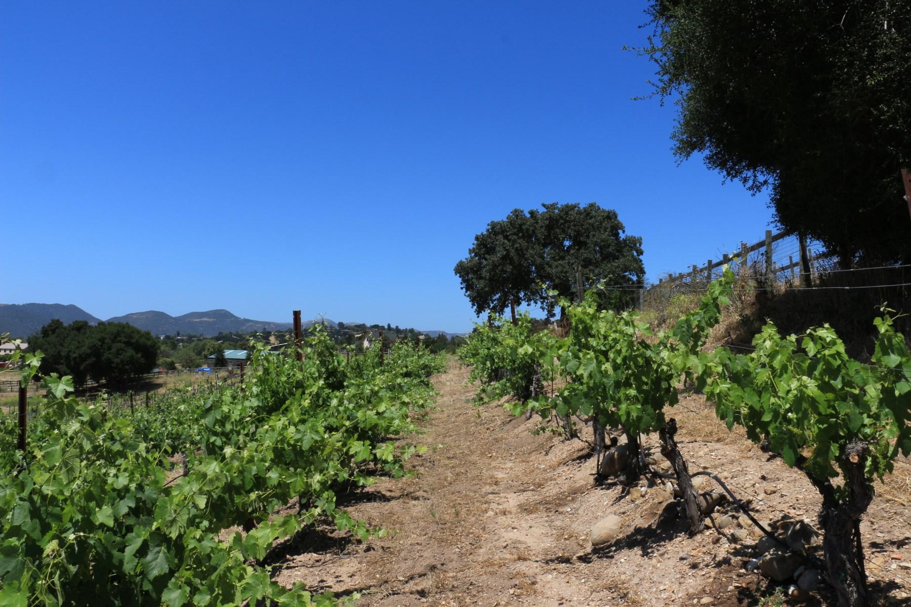 Arazi için Satış at Agricultural Opportunity 0 Alamo Pintado Road Solvang, Kaliforniya, 93463 Amerika Birleşik Devletleri