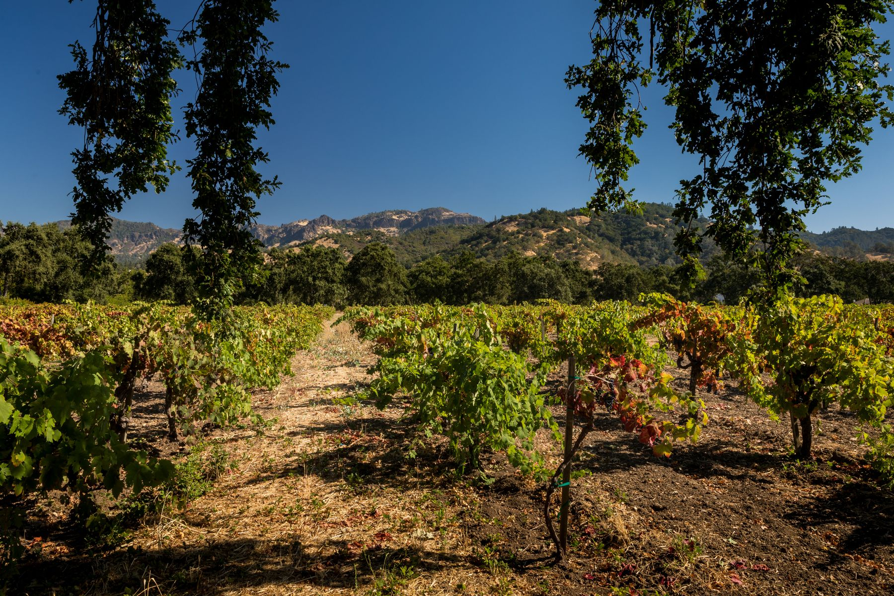 Single Family Homes for Sale at Iconic Vineyard Estate Site 2400 Grant St Calistoga, California 94515 United States