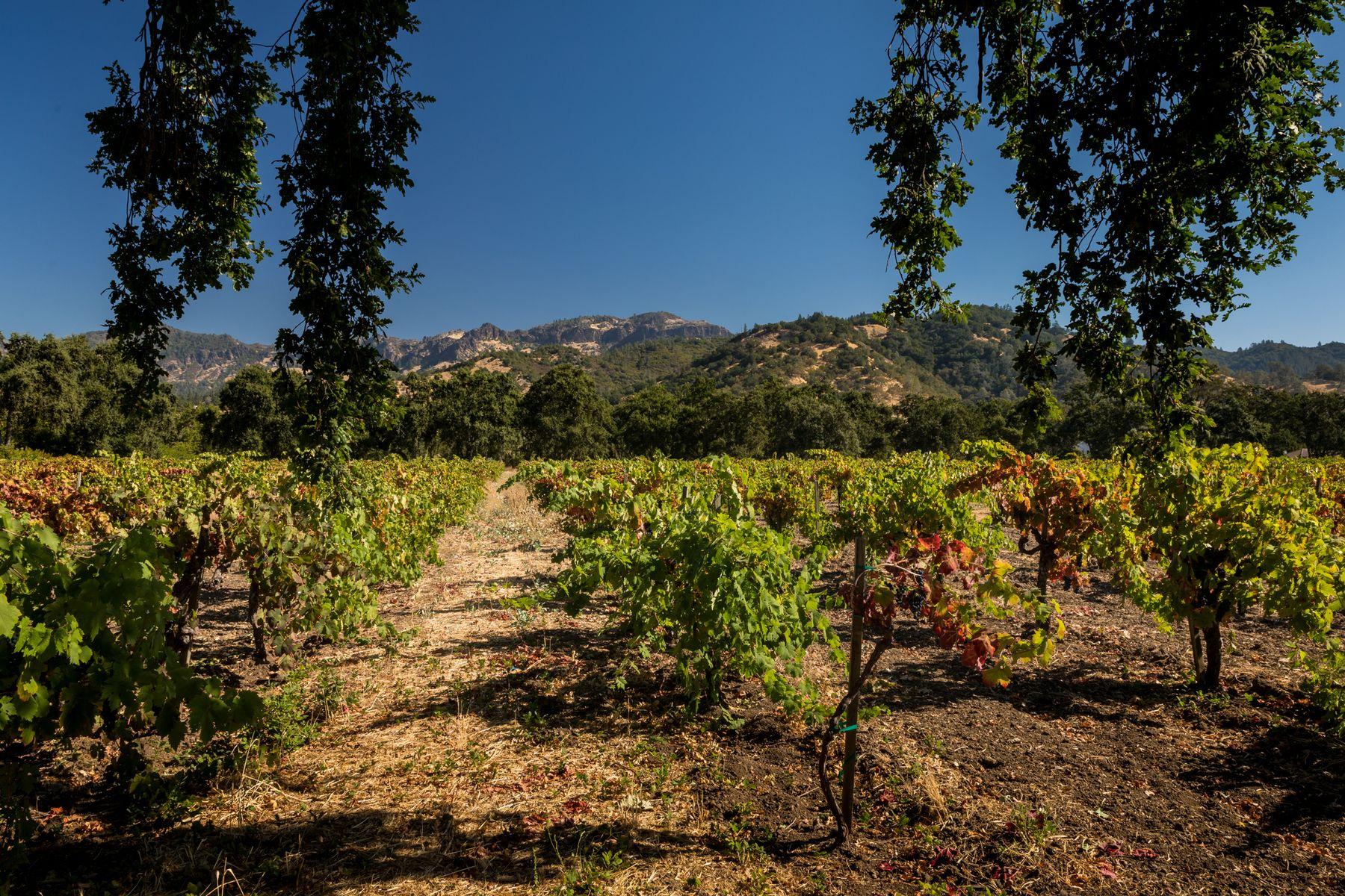 Single Family Homes por un Venta en Iconic Vineyard Estate Site 2400 Grant St Calistoga, California 94515 Estados Unidos