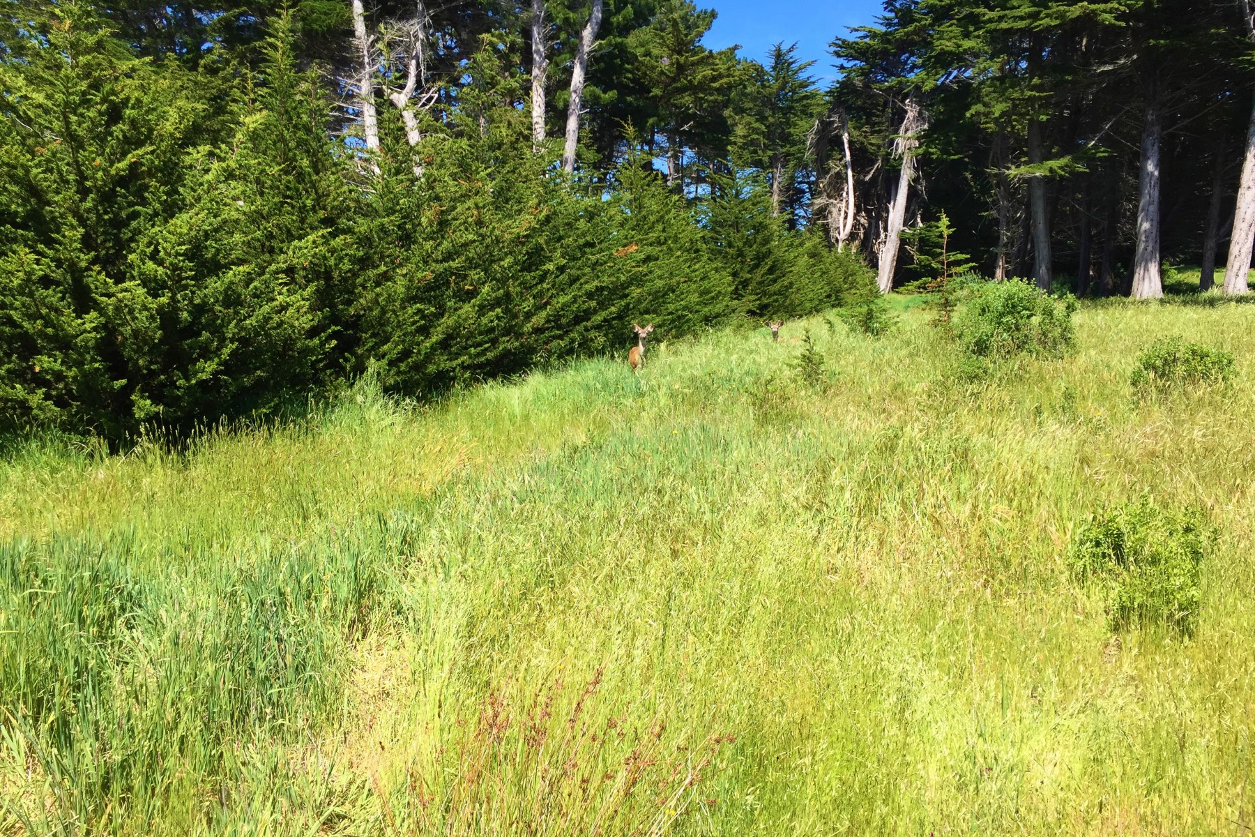 Additional photo for property listing at Impeccably Located Lot 42430 Leeward Rd The Sea Ranch, Californie 95497 États-Unis