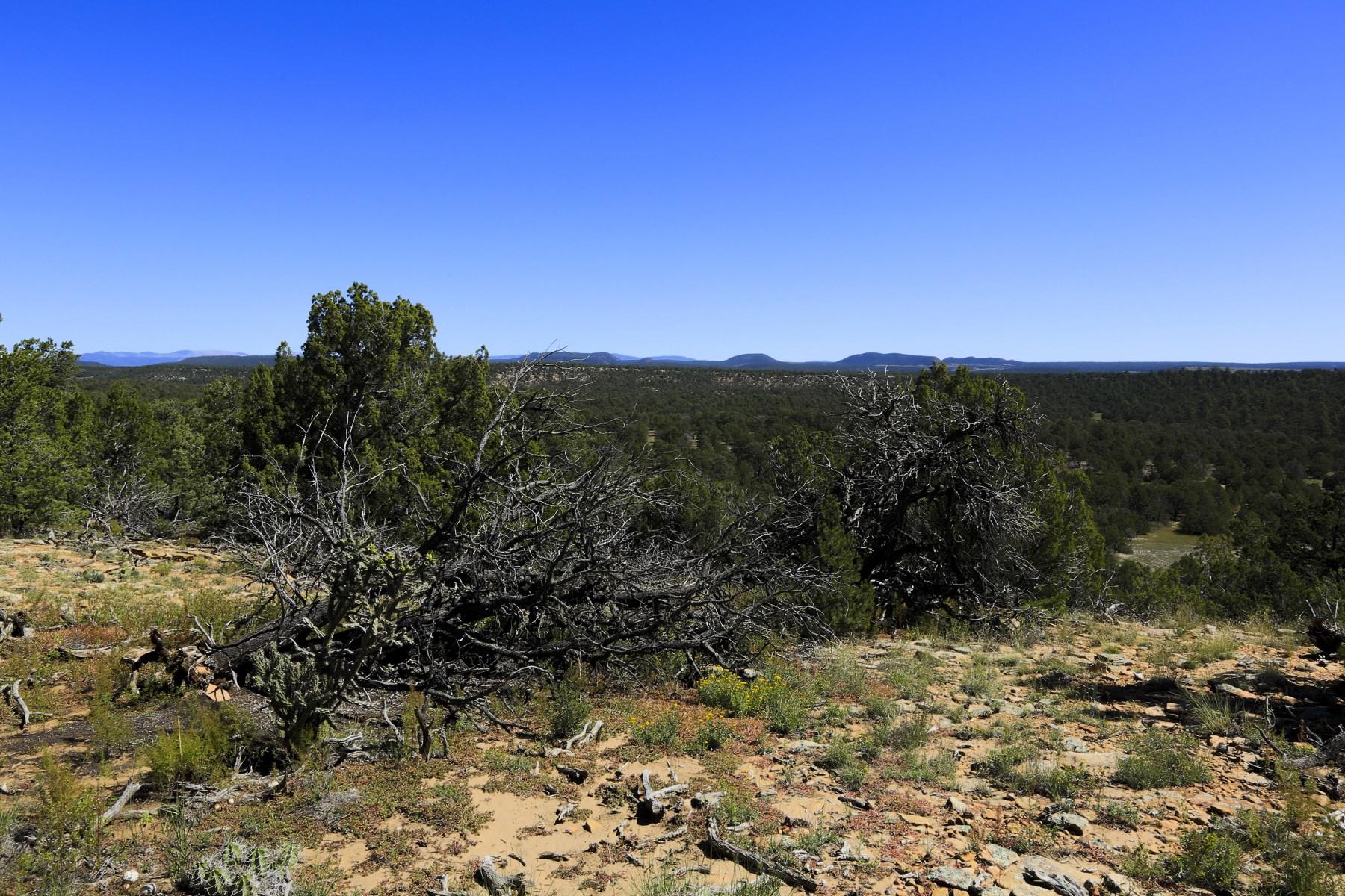 Land for Sale at 503 Ojo De La Vaca Santa Fe, New Mexico, 87508 United States