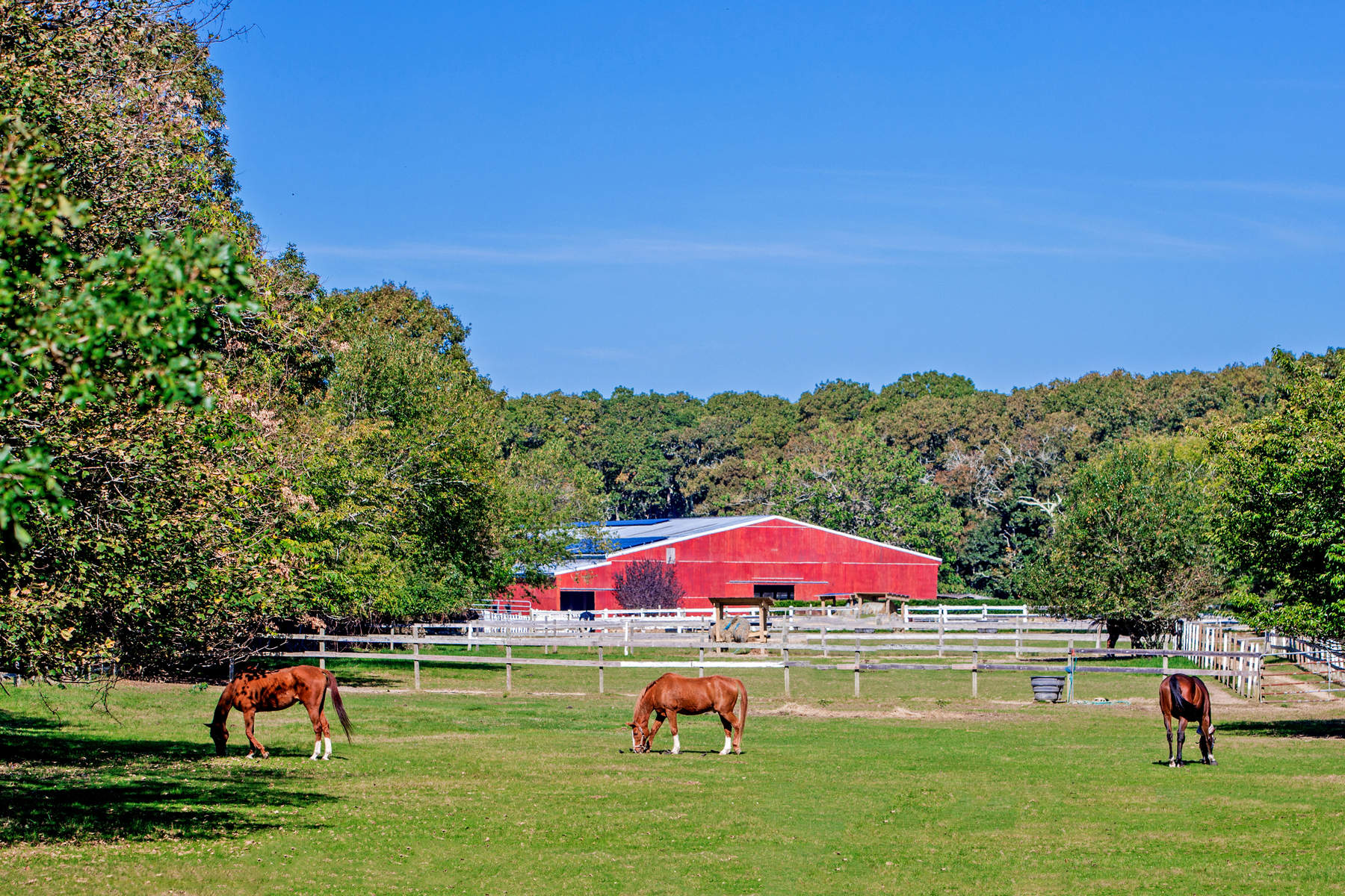 Granjas / Hacienda / Platanción por un Venta en 80 Dollar Champion 15+/- Acre Horse Farm 171 Oakview Highway East Hampton, Nueva York, 11937 Estados Unidos