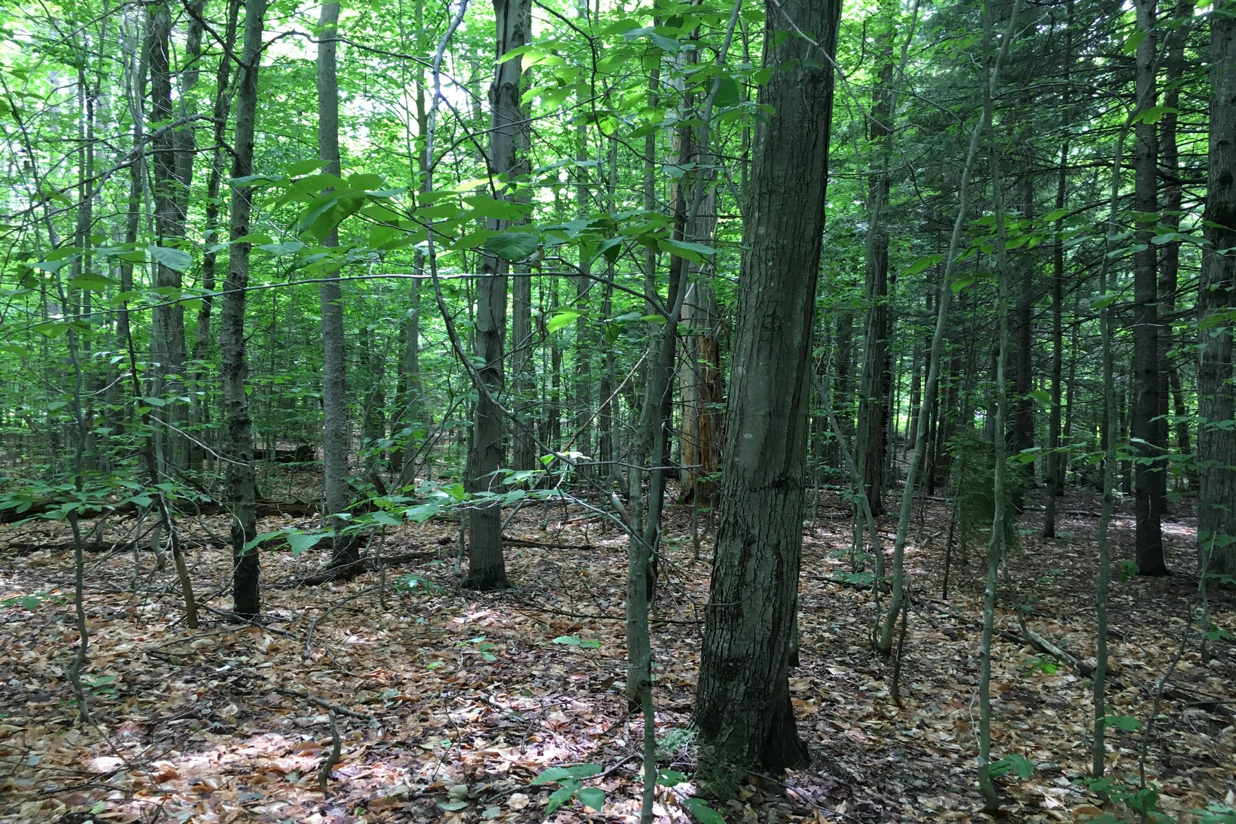 Terreno per Vendita alle ore Nice 1 Acre Parcel Neal Stratton! Lot #59 Edie Lane (mountain Acres) 59 Jamaica, Vermont, 05343 Stati Uniti