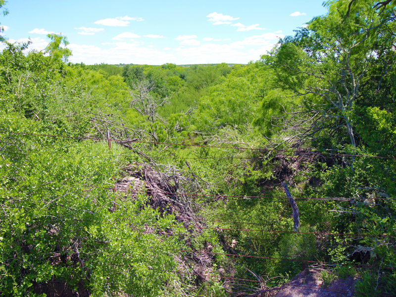 Additional photo for property listing at 2.097+- Acres Lagarto Valley Ranch CR 235 Orange Grove, Texas 78061 Estados Unidos