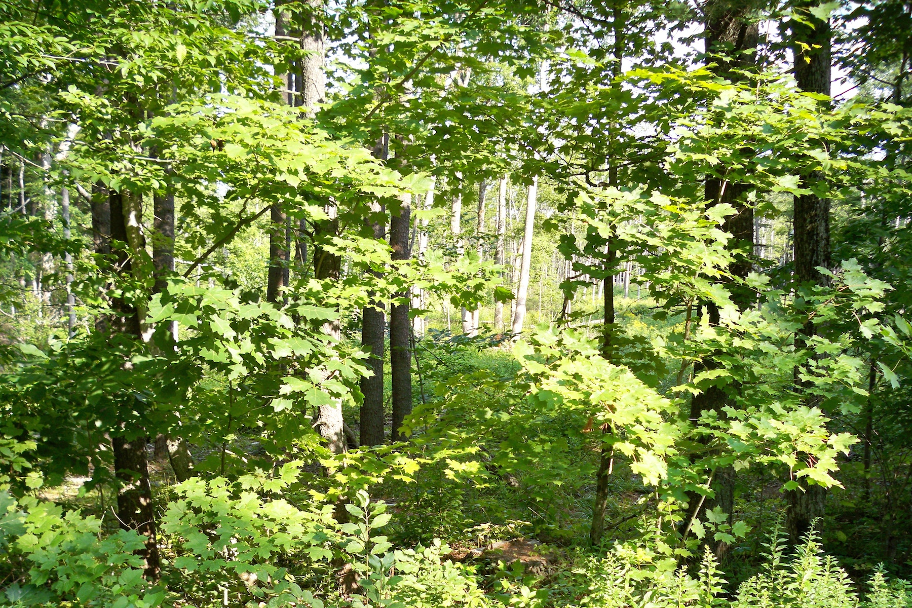 Additional photo for property listing at 87.87 Dreamy Acres in Greenfield 155  Squashville Rd Greenfield, Nueva York 12833 Estados Unidos