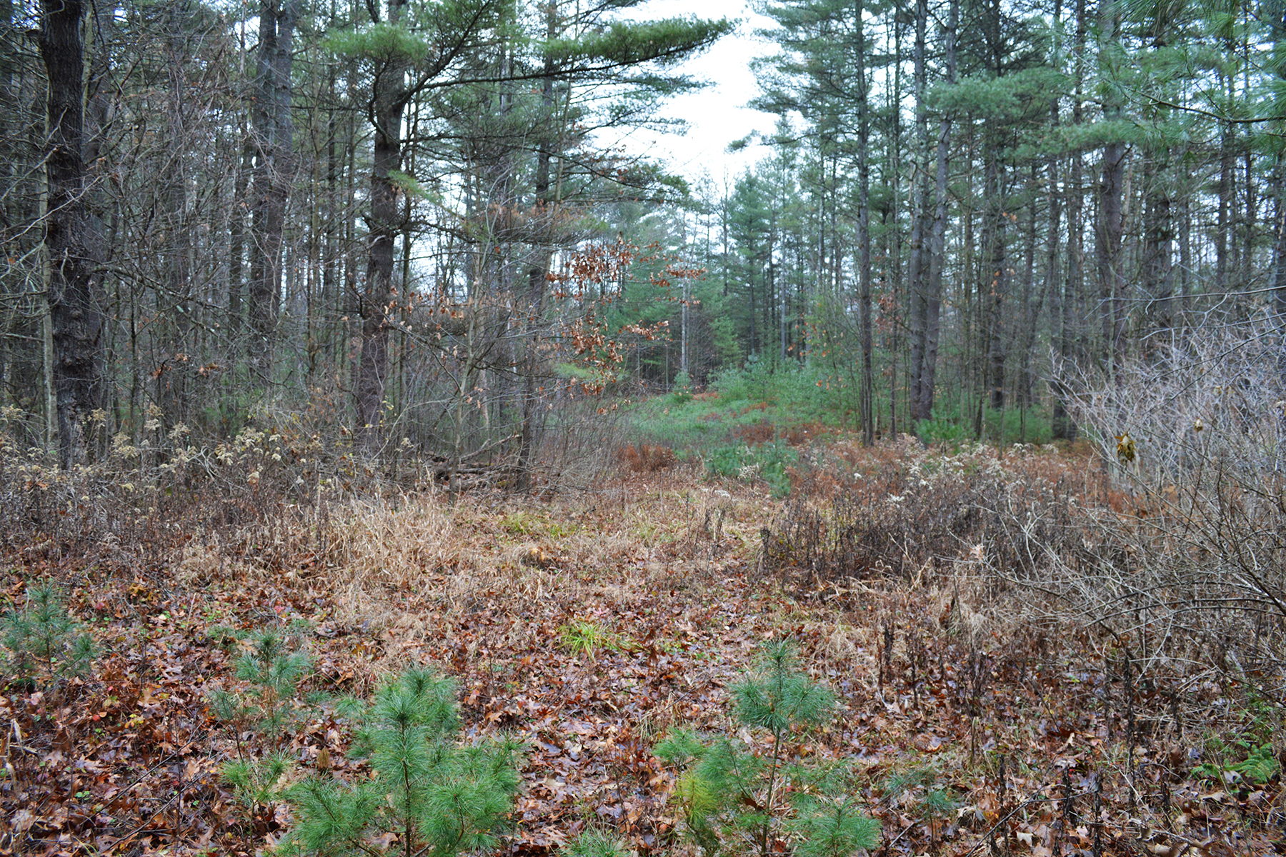 Other Residential for Sale at Excellent Wilton Building Lot 155 Edie Rd Saratoga Springs, New York 12866 United States