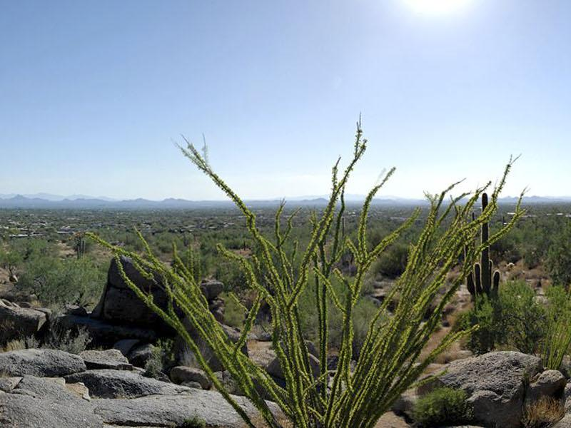 Property Of North Scottsdale Exceptional 4+ Acre Hillside Home Site
