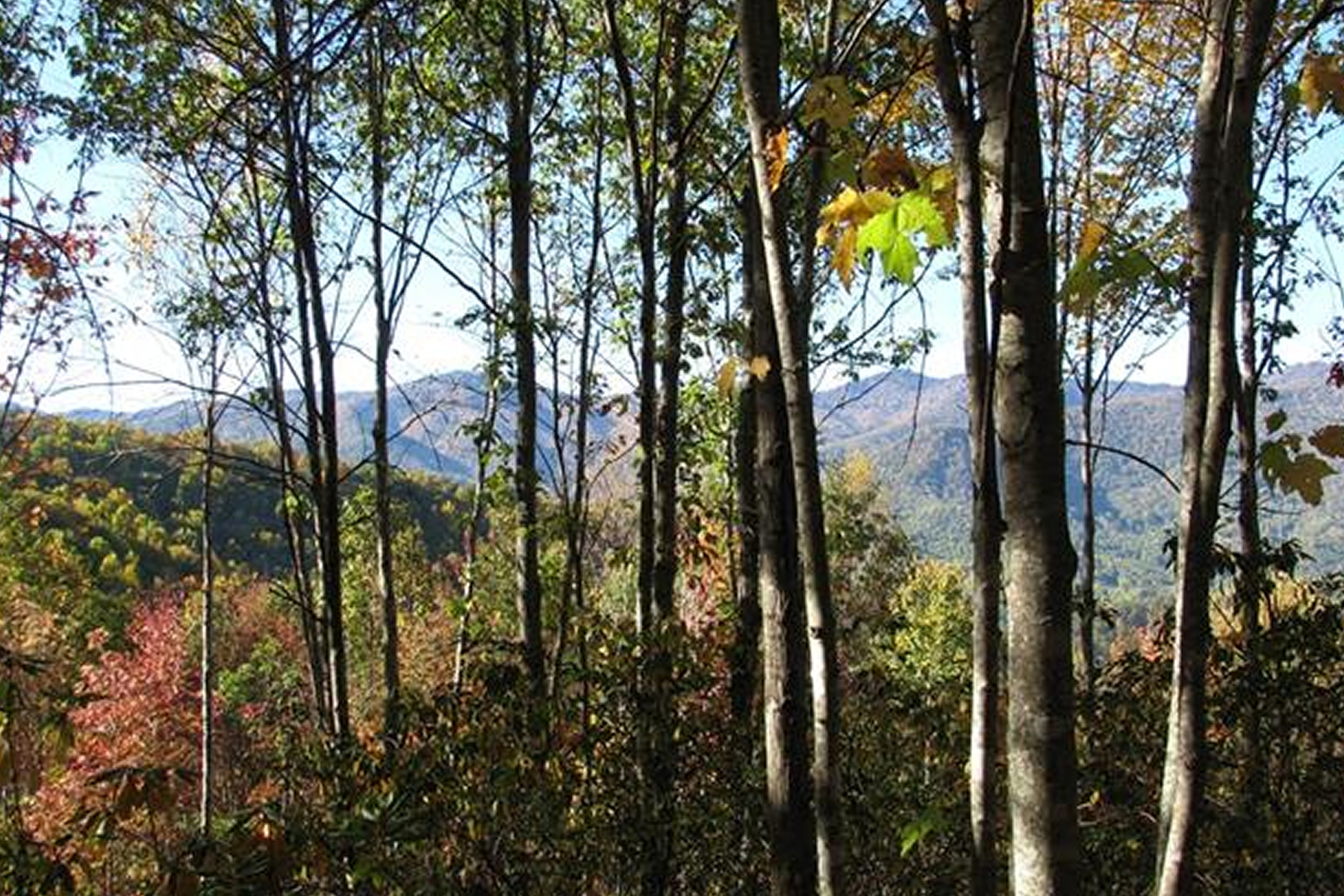 Land for Sale at BALSAM MOUNTAIN PRESERVE Lot 239 Down The Hill Rd Sylva, North Carolina, 28779 United States
