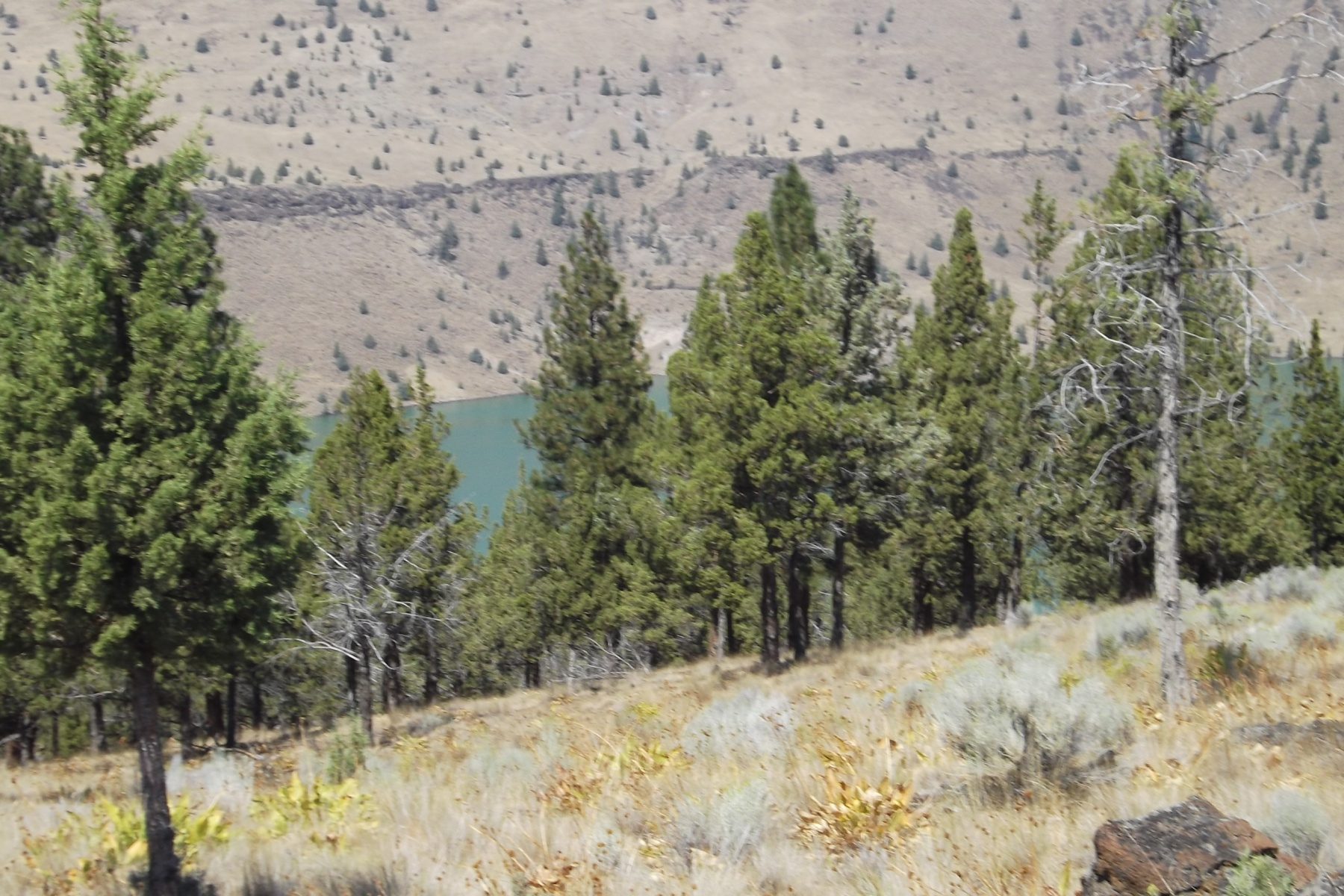 土地 为 销售 在 Lake Views & Ready for Camping 12190 SW This Way Ln 卡尔弗, 俄勒冈州, 97734 美国
