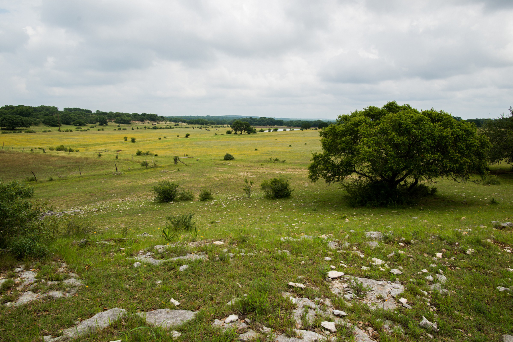 Additional photo for property listing at 152± Acres - Bain Cave Ranch 3051 Spring Branch Rd Spring Branch, Texas 78070 United States