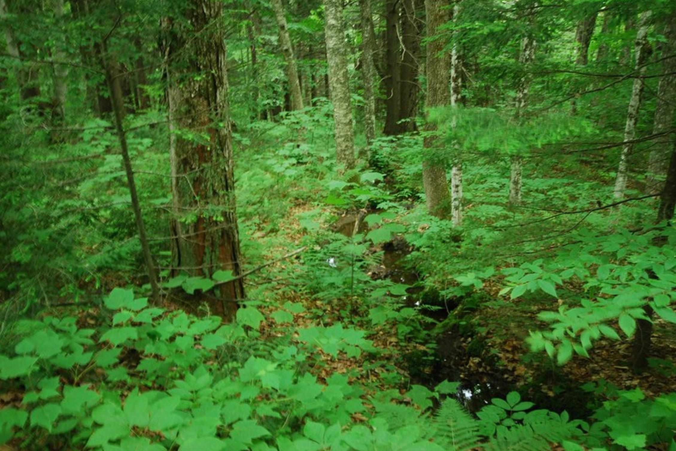 Đất đai vì Bán tại 0 Under The Mountain Road, Jamaica 0 Under The Mountain Rd Jamaica, Vermont, 05343 Hoa Kỳ
