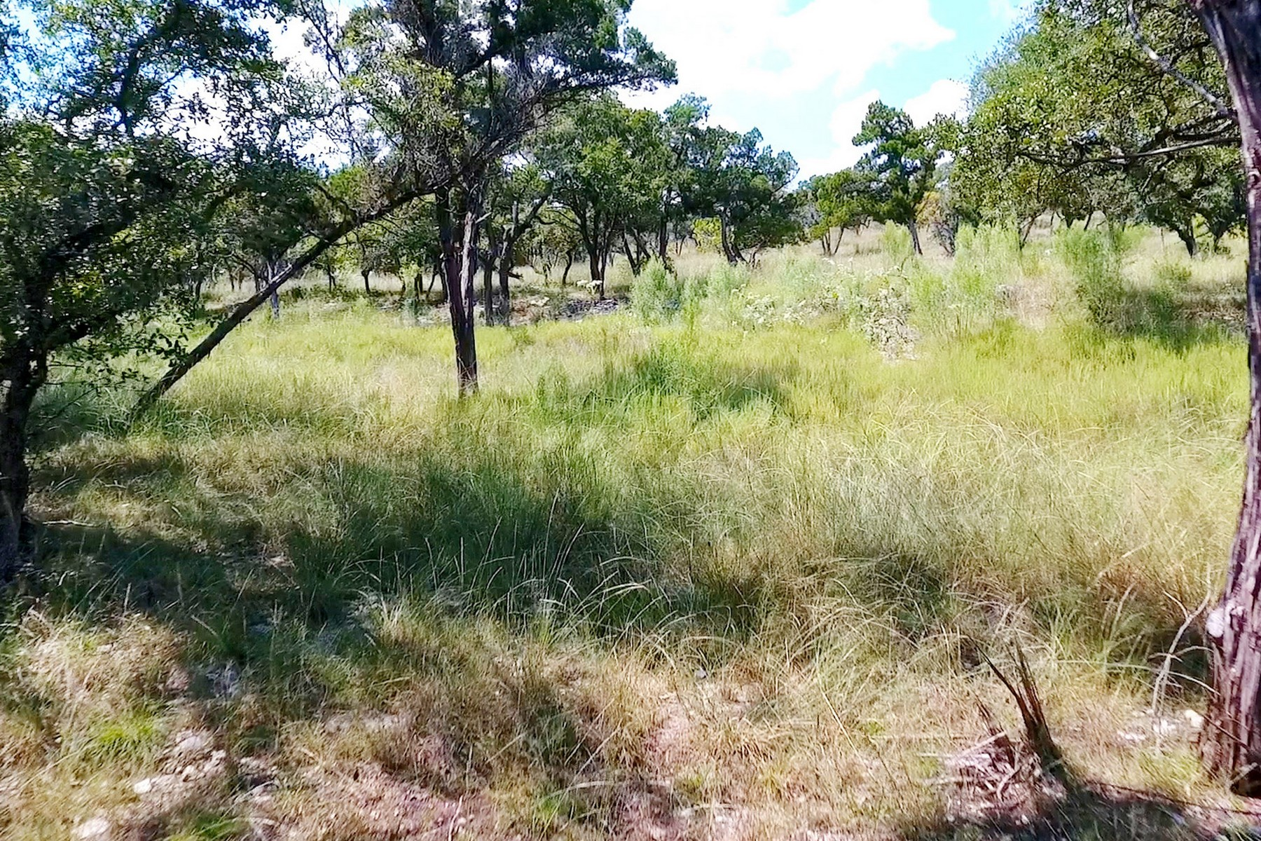 Additional photo for property listing at Unique Land Value Minutes to Austin Lot 10 Old Baldy Trl Dripping Springs, Texas 78620 Estados Unidos