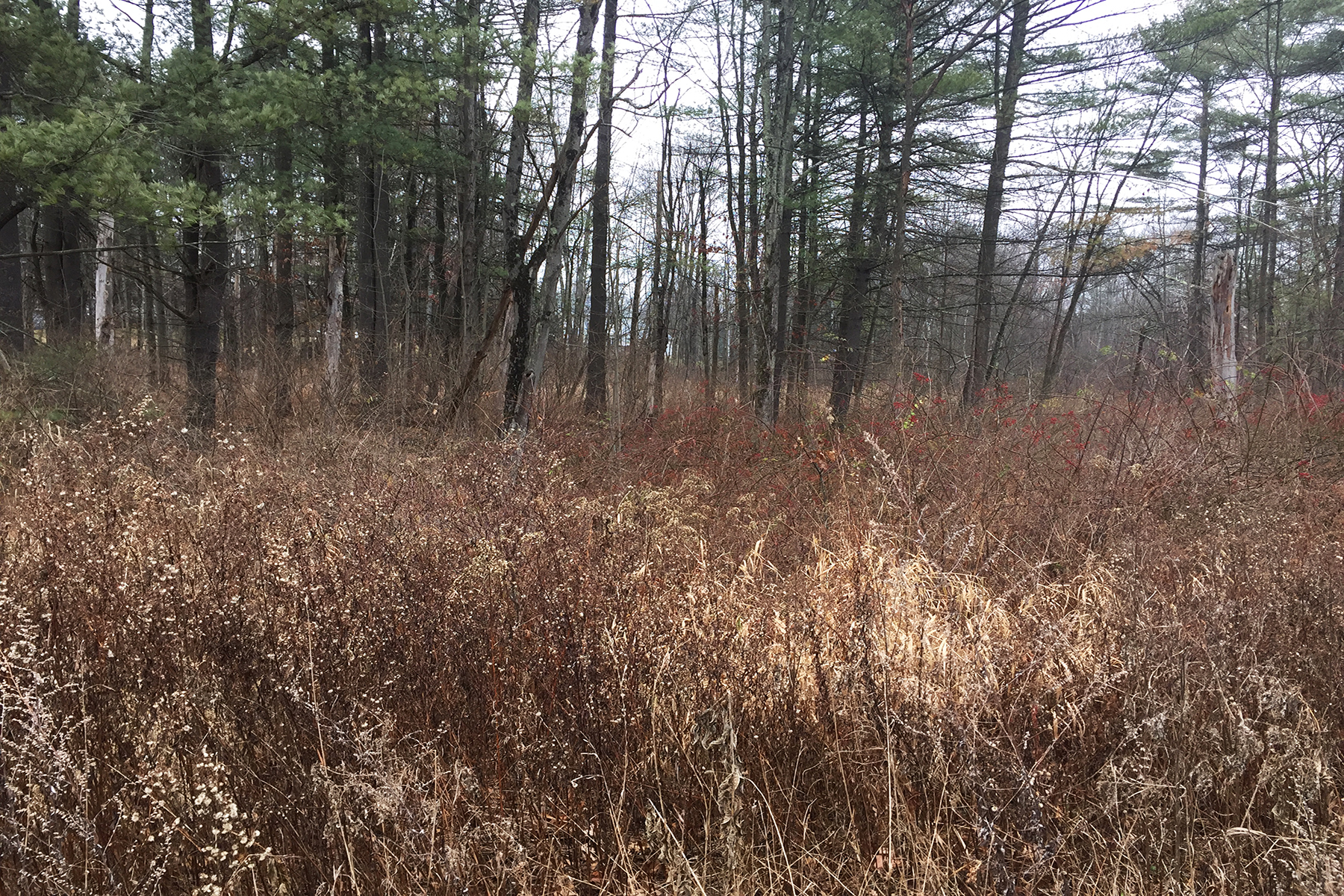 Other Residential for Sale at 3 Acre Homesite 0 Ridge Rd Queensbury, New York 12804 United States