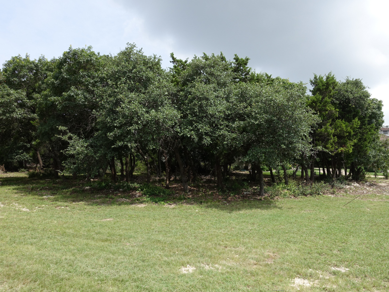 Land for Sale at GORGEOUS LOT IN THE DOMINION 15 Queens Hill San Antonio, Texas 78257 United States