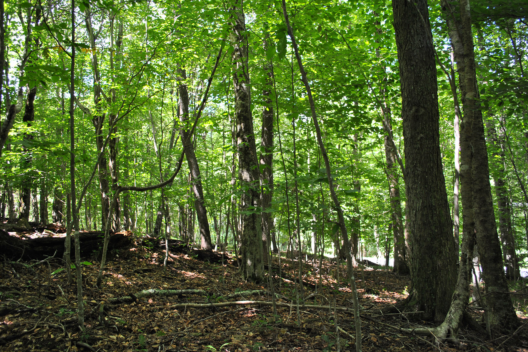 Land for Sale at BEECH MOUNTAIN 6 Charter Hill Woods Beech Mountain, North Carolina 28604 United States