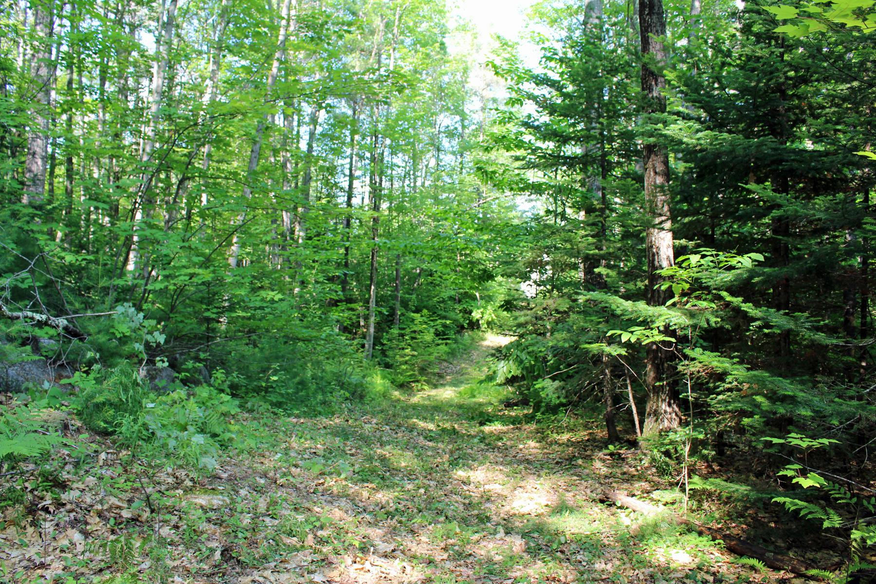 Terreno per Vendita alle ore Wilder Lane Lot #7 Wilder Ln New London, New Hampshire, 03257 Stati Uniti
