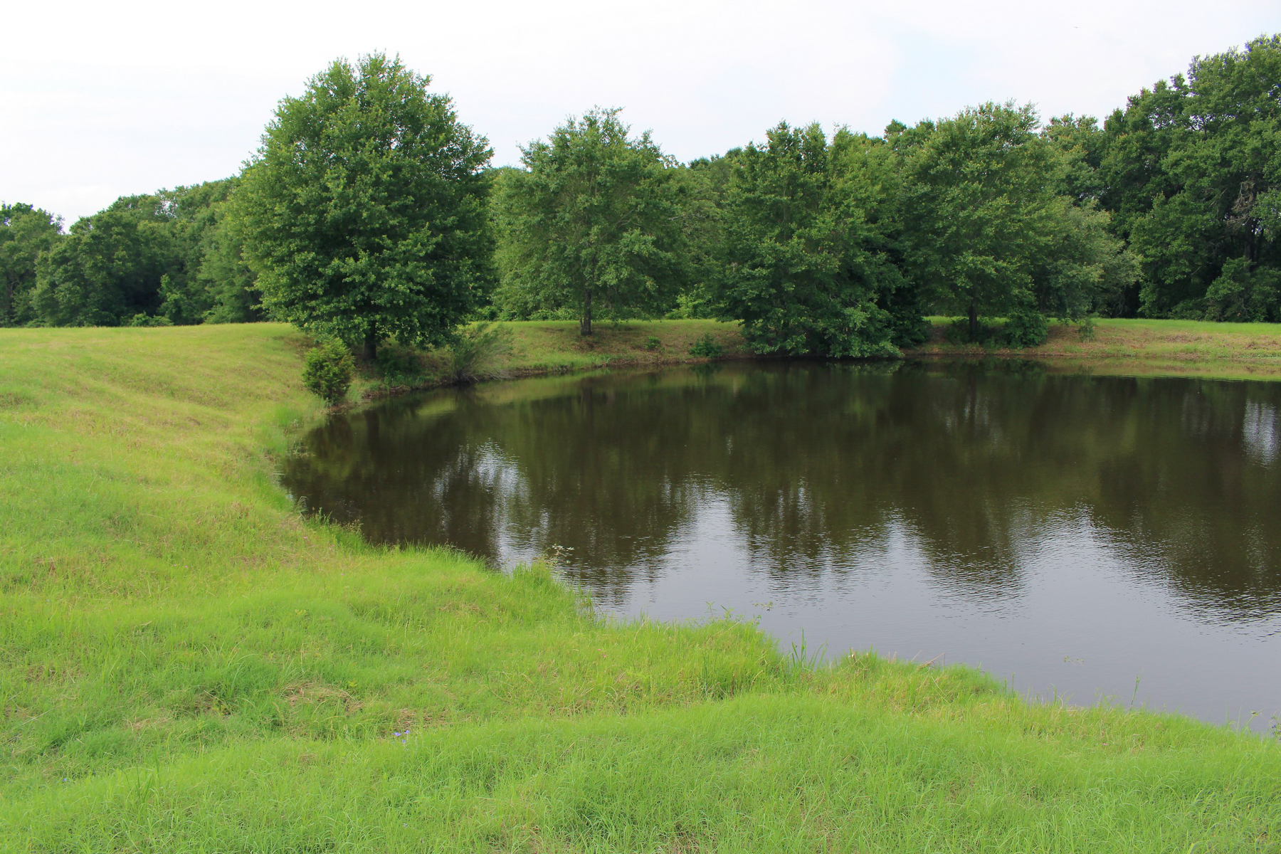 Additional photo for property listing at 272± Acres Bastrop Co. - Mid Springs Creek Ranch 272+- Acres  Bastrop County Paige, Texas 78659 Estados Unidos