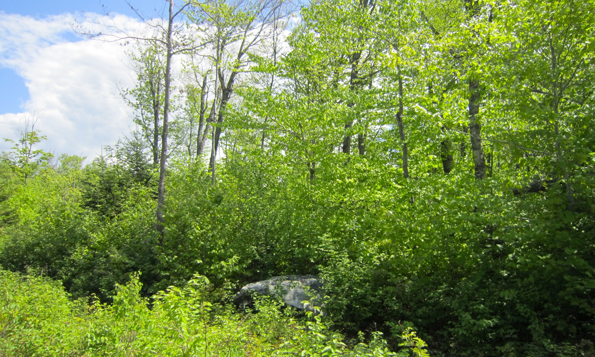 Land for Sale at Candeleros Court Lot 6 Ludlow, Vermont 05149 United States