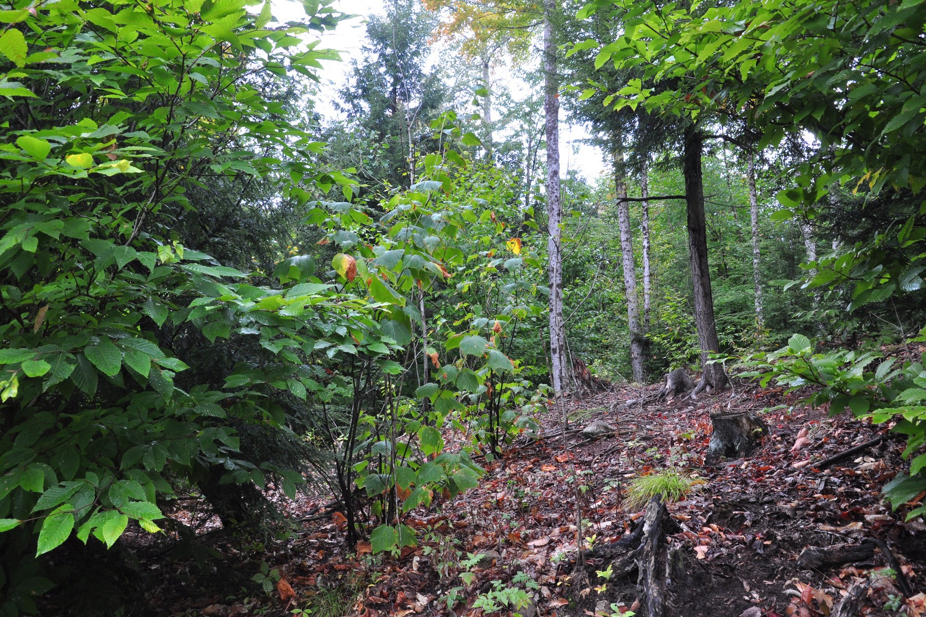 Additional photo for property listing at 177+ Acre Parcel With 2 Acre Cleared Building Site 45  Valley Rd Thurman, New York 12810 United States