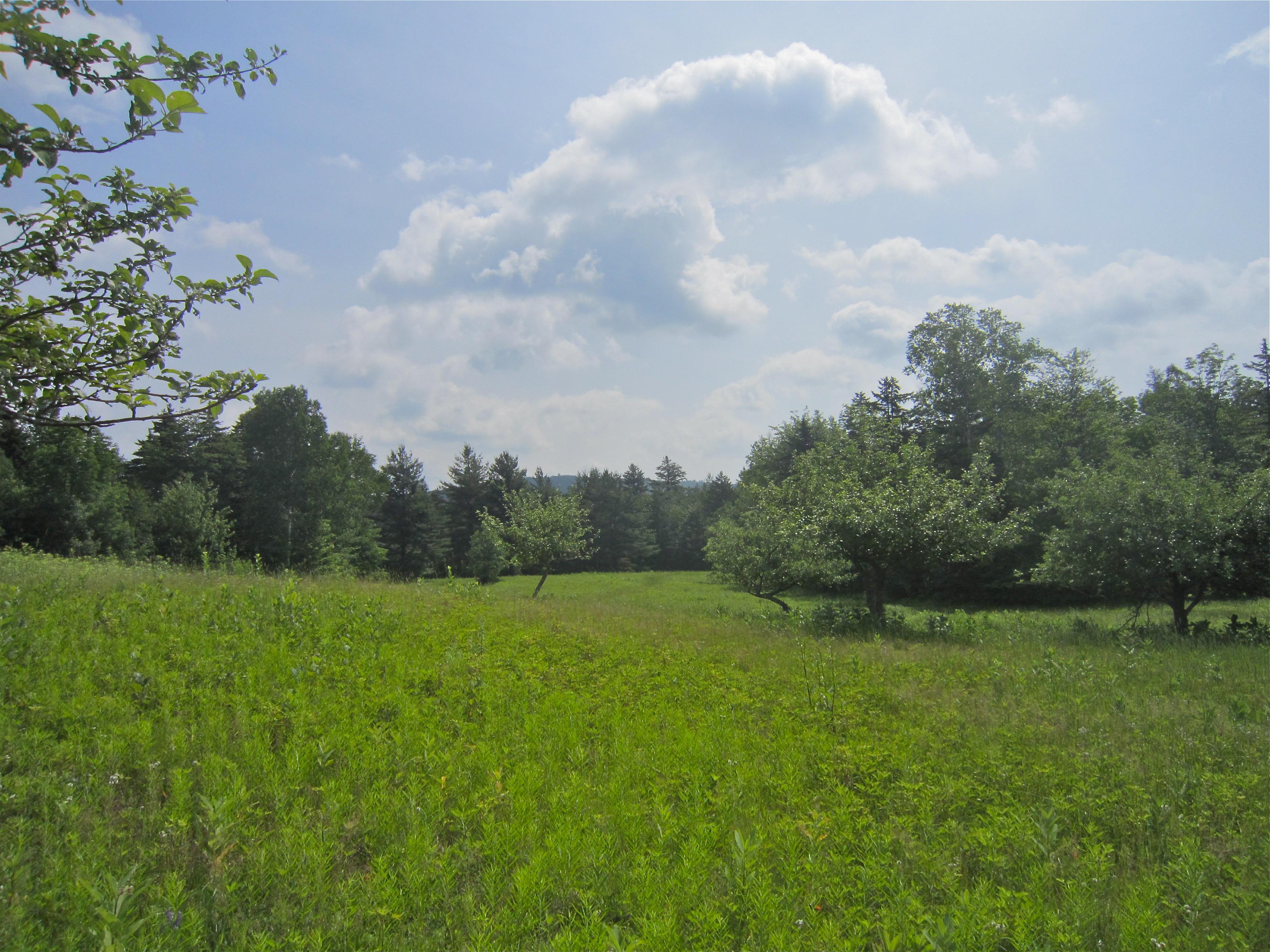 Terrain pour l Vente à Privacy, Views and Acreage ! Cy Parker Rd Mount Holly, Vermont 05758 États-Unis