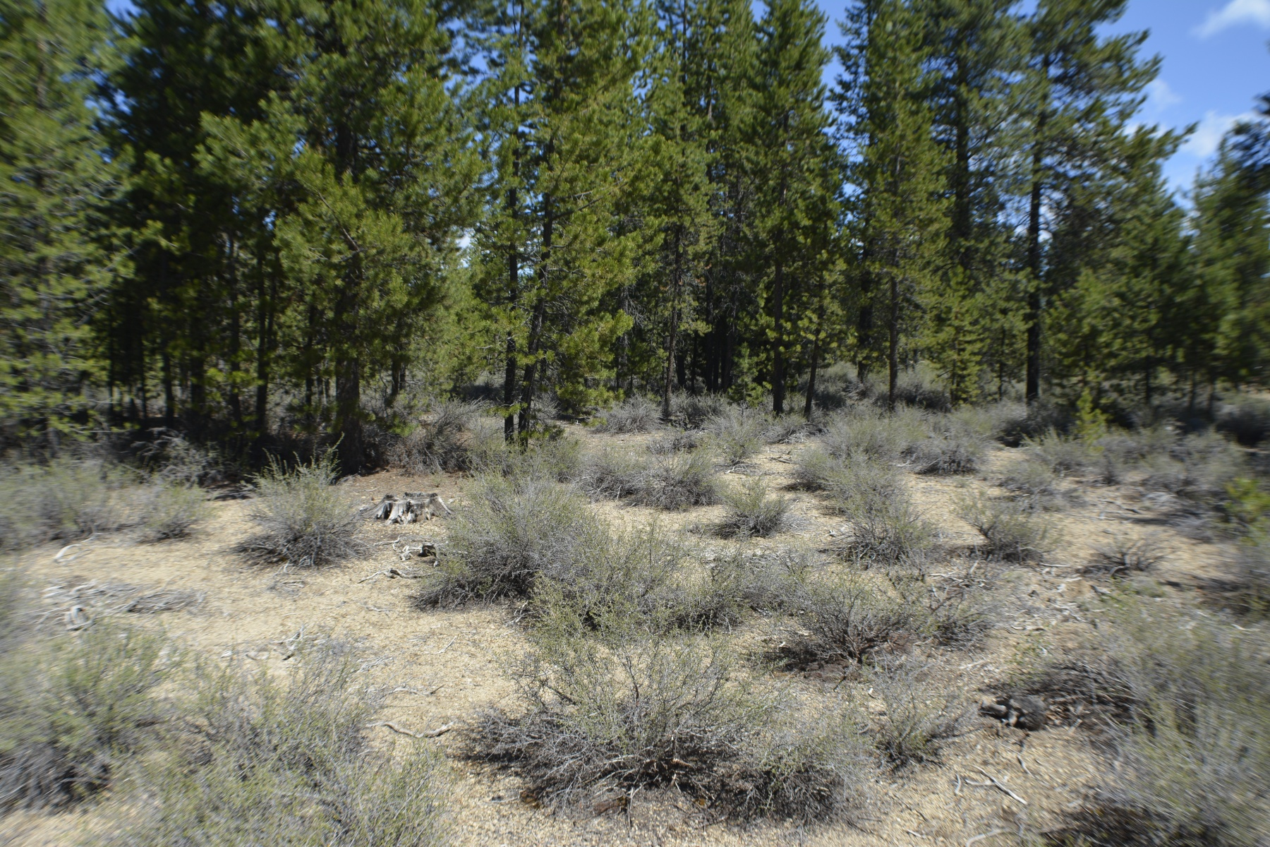 Land for Sale at 1600 Gracies Road, GILCHRIST 1600 Gracies Rd Gilchrist, Oregon, 97737 United States