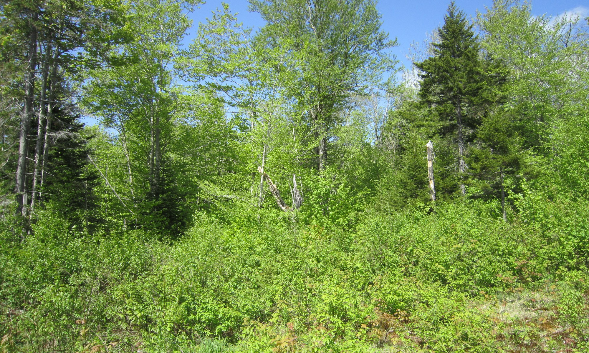 Land for Sale at Candeleros Court Lot 4 Ludlow, Vermont 05149 United States