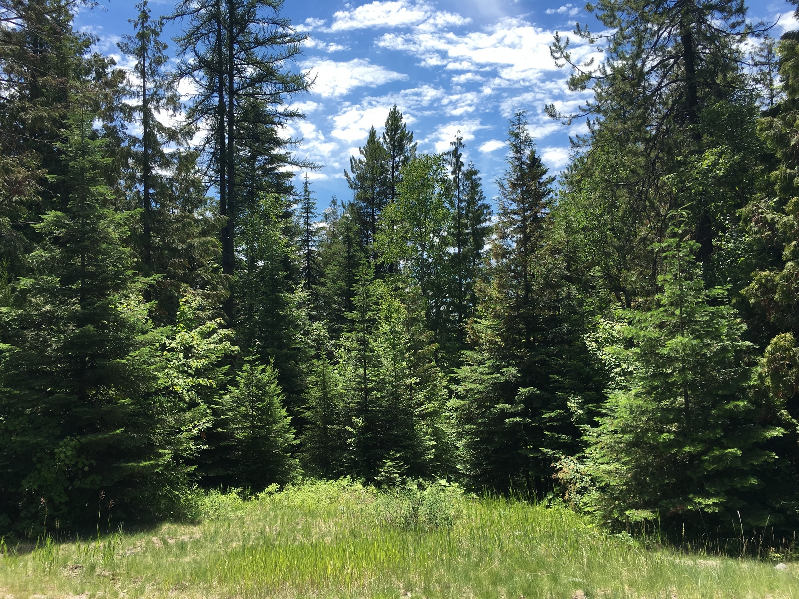 sales property at 228 Arrowhead Dr , Whitefish, MT 59937
