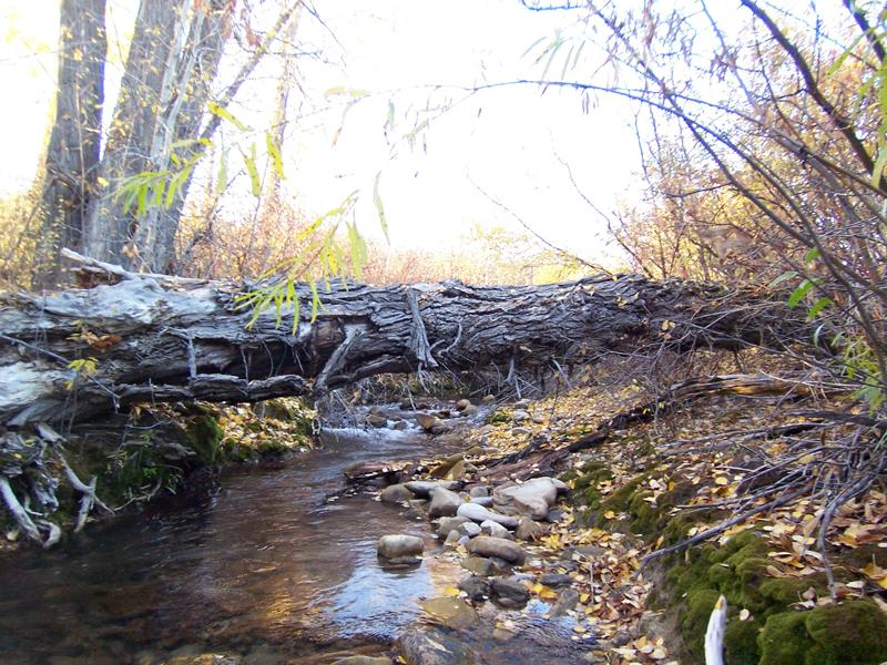 Property Of 2.5 + Acre Sites - Fox Creek Canyon