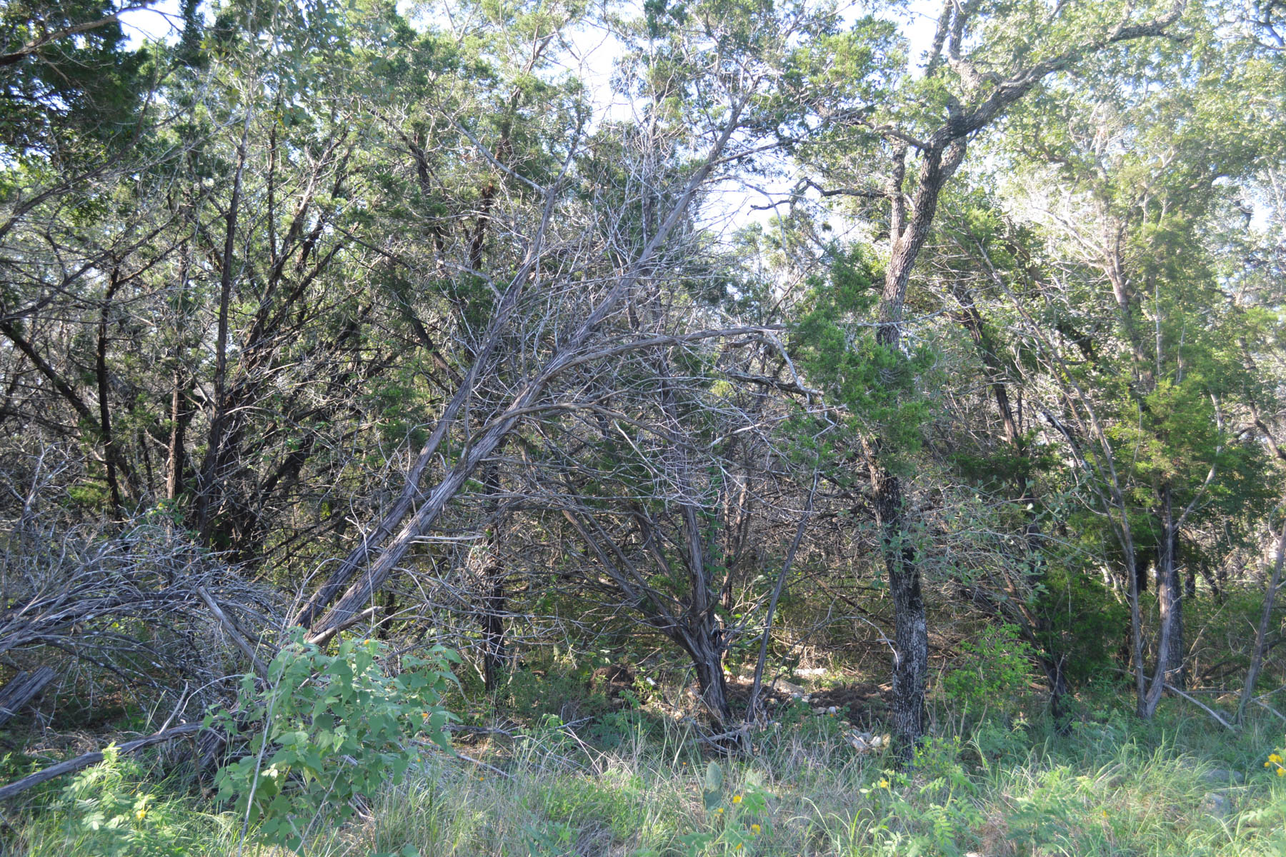 Additional photo for property listing at Oversized Lot in the Prestigious Havenwood 807 Haven Point Loop New Braunfels, Texas 78132 Estados Unidos