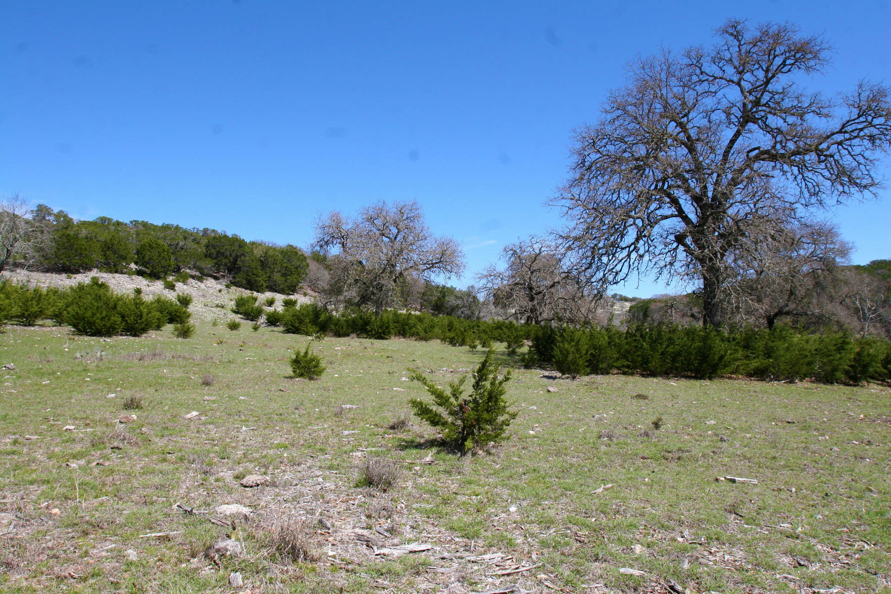 Additional photo for property listing at 700± Acres Whiskey Springs Ranch 700 +/- Acres / Hwy 16 Kerrville, Texas 78028 United States