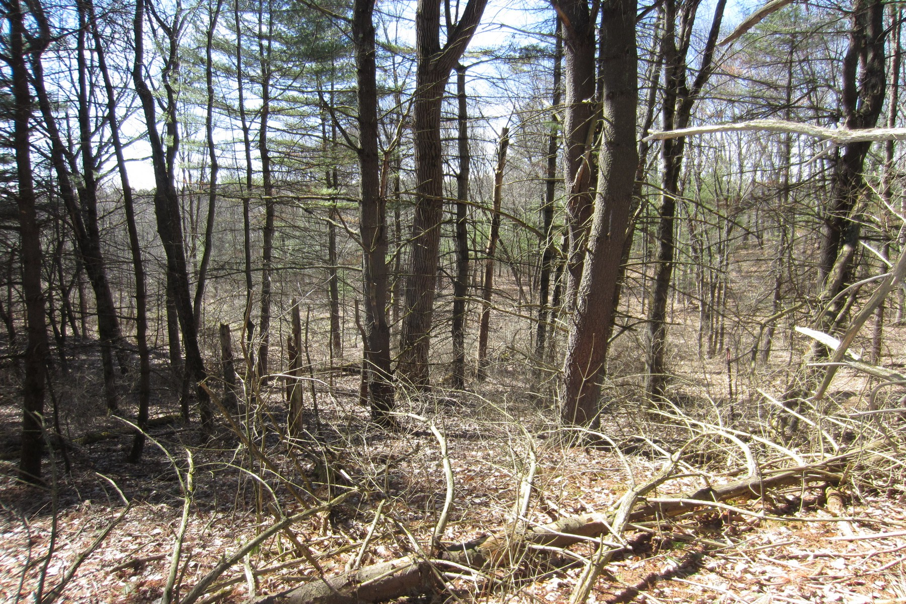 Additional photo for property listing at Building Lot 0  Homestead Rd Saratoga Springs, New York 12866 United States