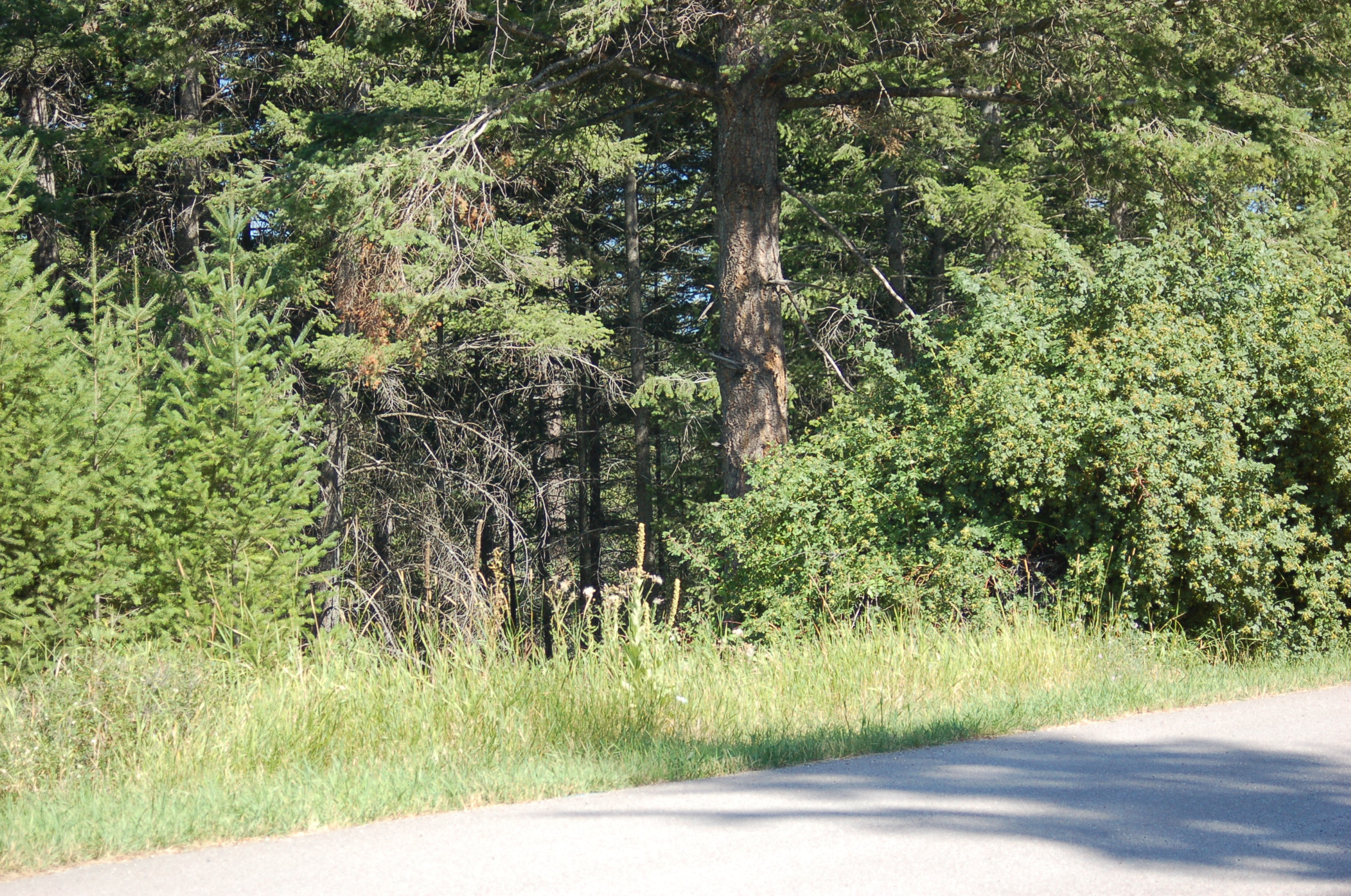 Land for Sale at 169 Wulff Ln , Lakeside, MT 59922 169 Wulff Ln Lakeside, Montana, 59922 United States