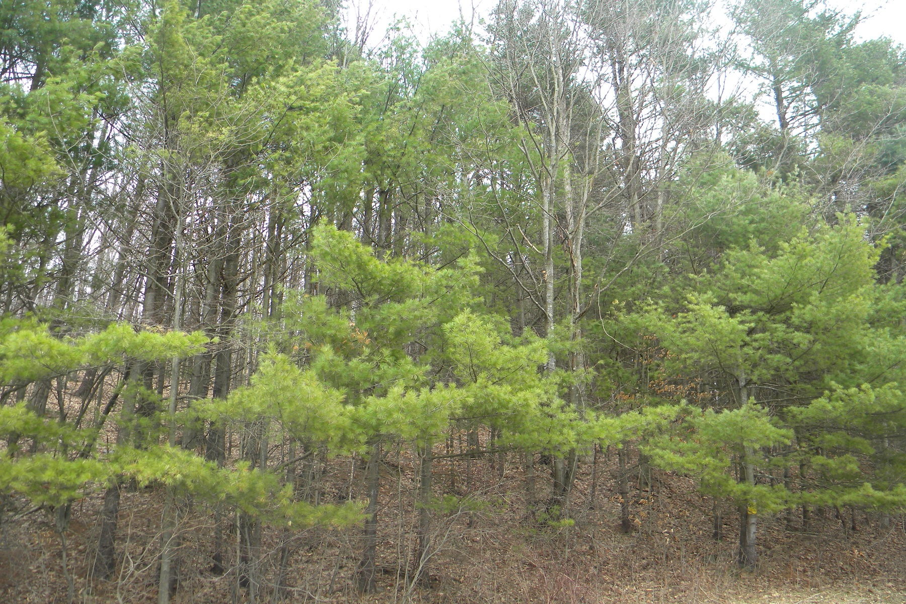 sales property at Hillside Acreage