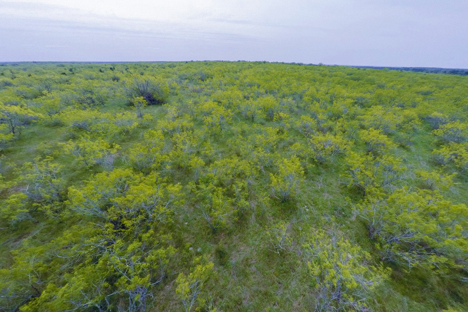 Additional photo for property listing at 48 +- Acres Caldwell County 1912 Seminole Trl Dale, Texas 78616 Estados Unidos