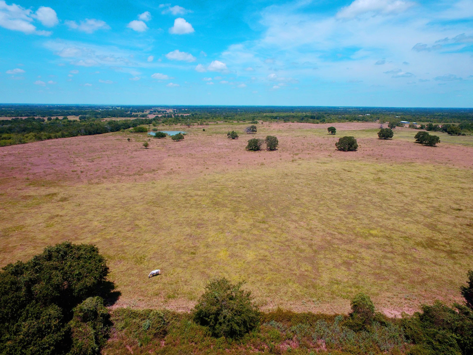 Additional photo for property listing at 386 Acre Ranch with All the Trappings 00 Oil Field Rd Lockhart, Texas 78644 United States