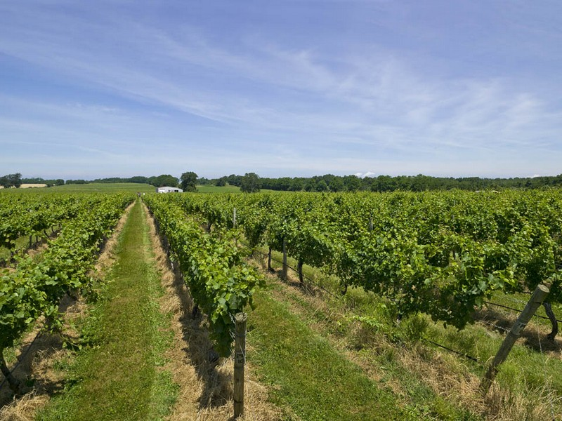 Vineyard for Sale at Palmer Vineyards 2 34995 Main Rd Cutchogue, New York 11935 United States