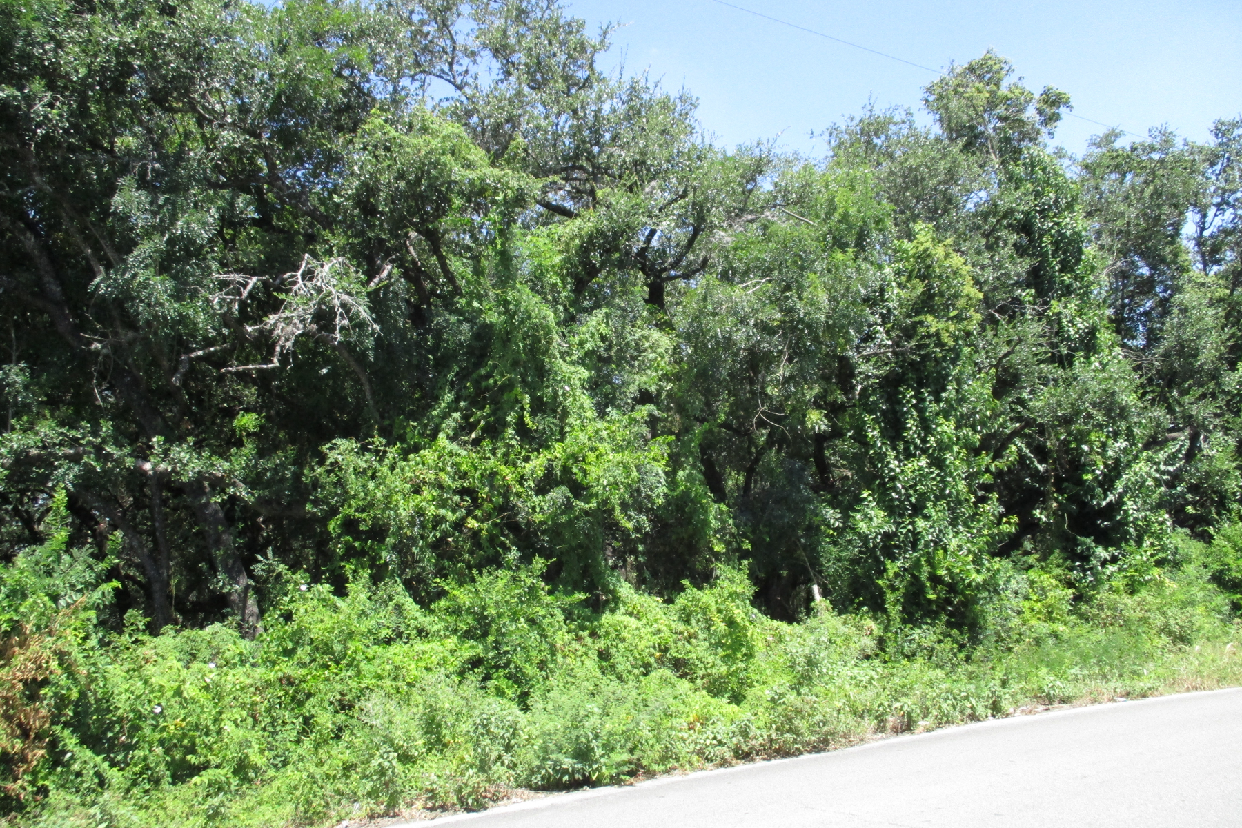 Terreno por un Venta en Stunning Property in Tupelo Estates 3915 Tupelo Ln San Antonio, Texas, 78229 Estados Unidos