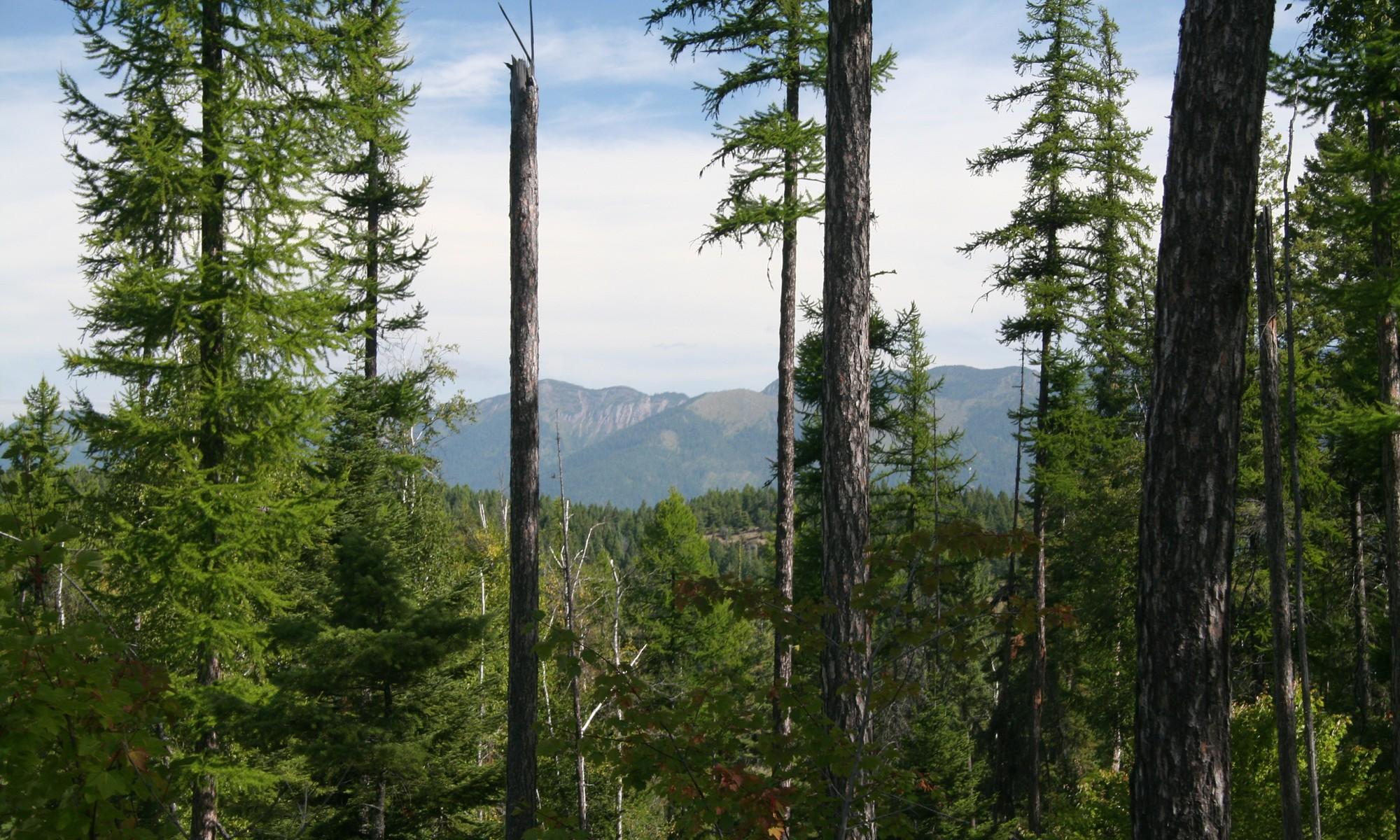 Arazi için Satış at Saddlehorn 217 Pinto Trl Bigfork, Montana, 59911 Amerika Birleşik Devletleri