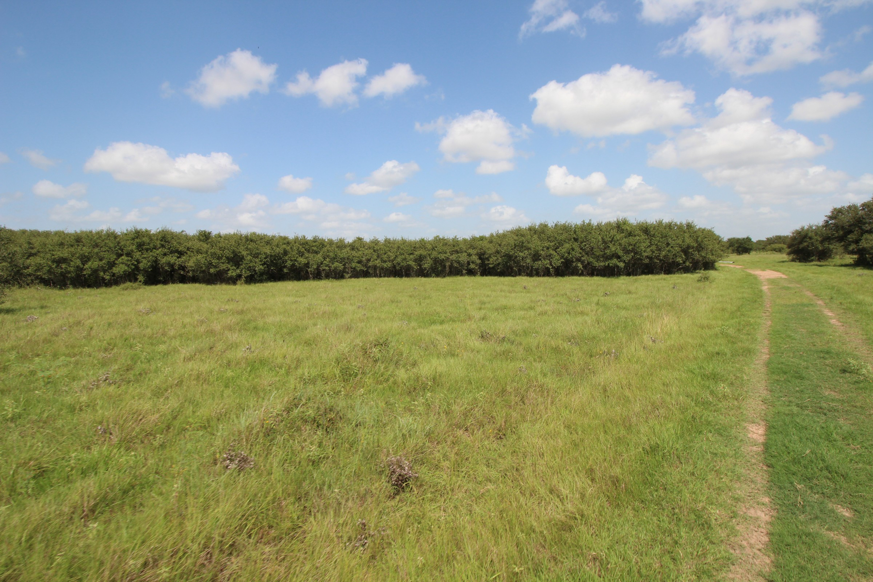 Additional photo for property listing at 894+- Acrew Tri-County Ranch 894+- AC  Tri-County Ranch ou Victoria, Texas 77901 Estados Unidos