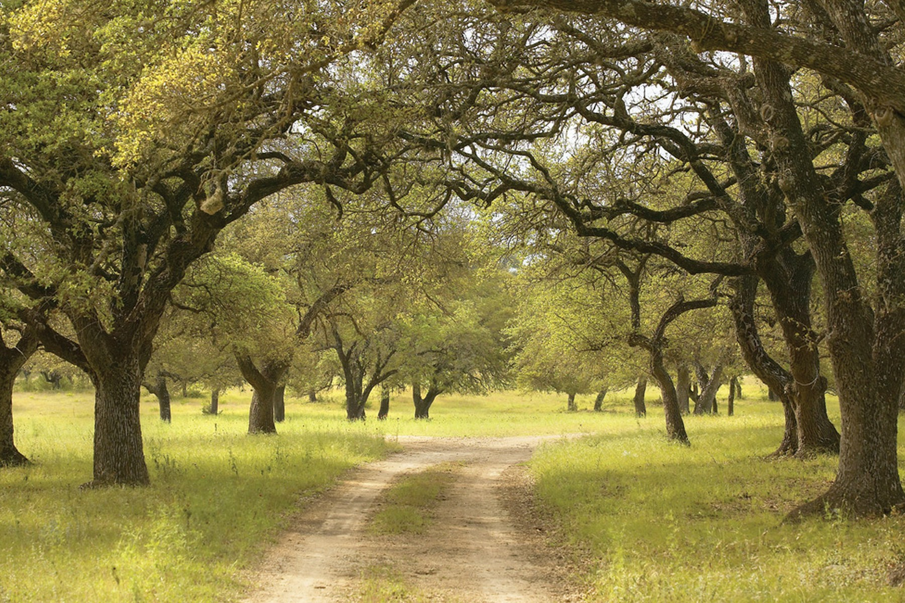 Land for Sale at One of A Kind Lot 18008 Glenville Cv Austin, Texas 78738 United States