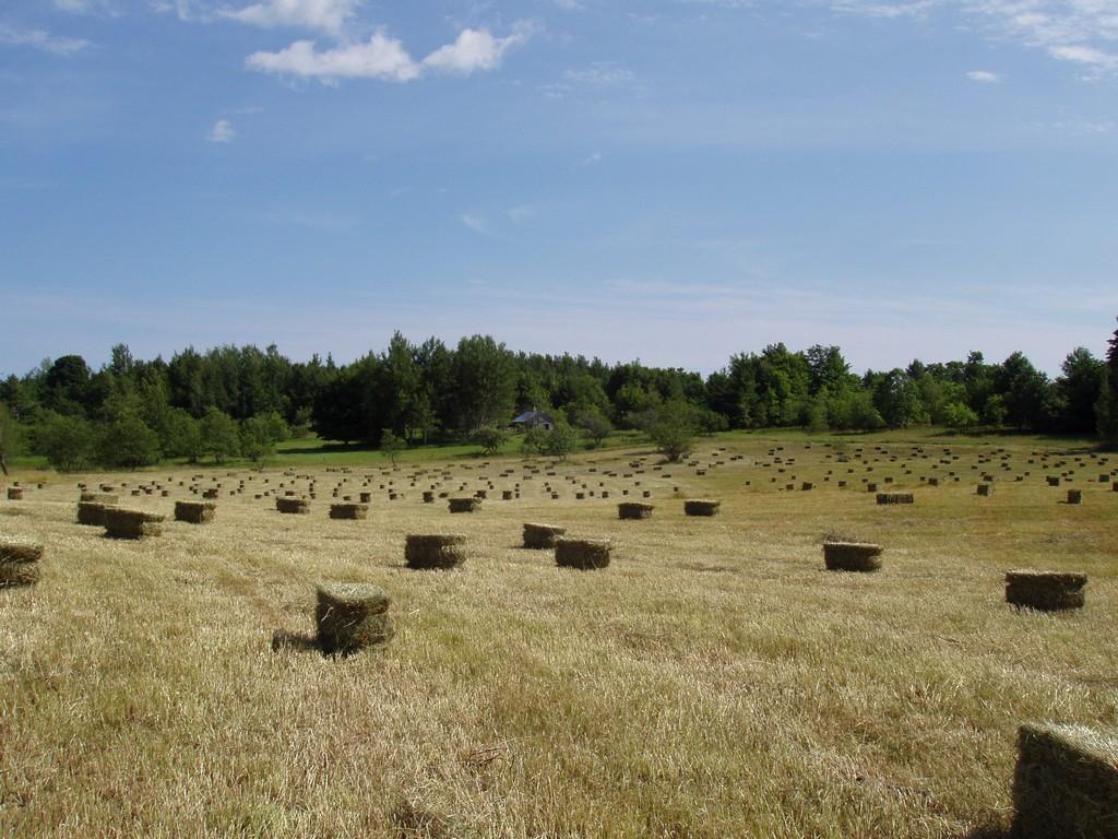 Property Of Beaver Island Acreage