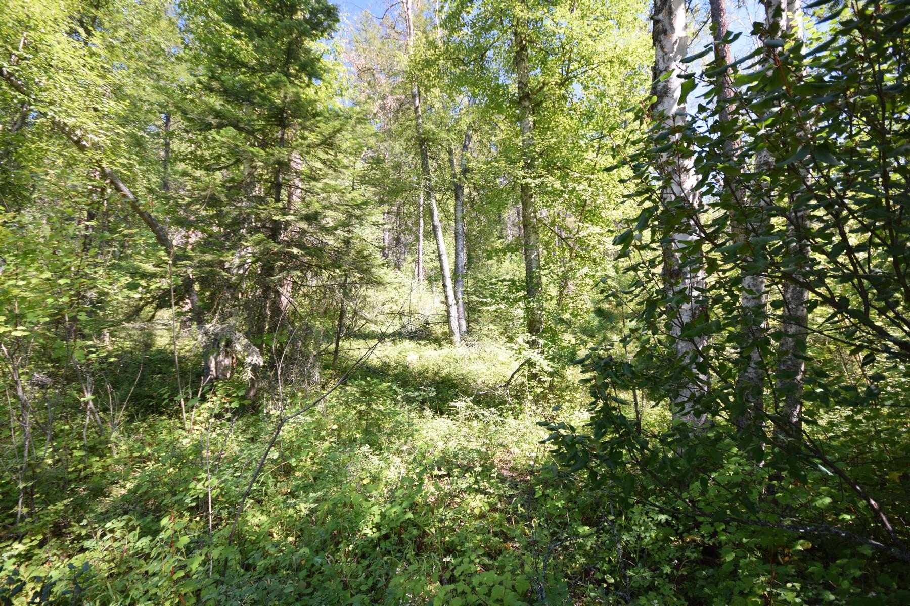 Terreno por un Venta en 682 Latigo Ln , Bigfork, MT 59911 682 Latigo Ln Bigfork, Montana, 59911 Estados Unidos