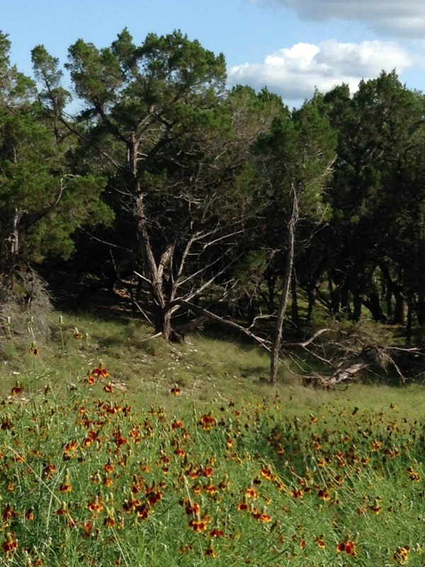 Additional photo for property listing at Hill Country Lot in Cordillera Ranch Lot 53 Granadilla Boerne, Texas 78006 Estados Unidos