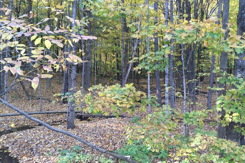 Additional photo for property listing at Greenfield Opportunity Awaits 3483A  Boyhaven Rd Greenfield, Нью-Йорк 12850 Соединенные Штаты