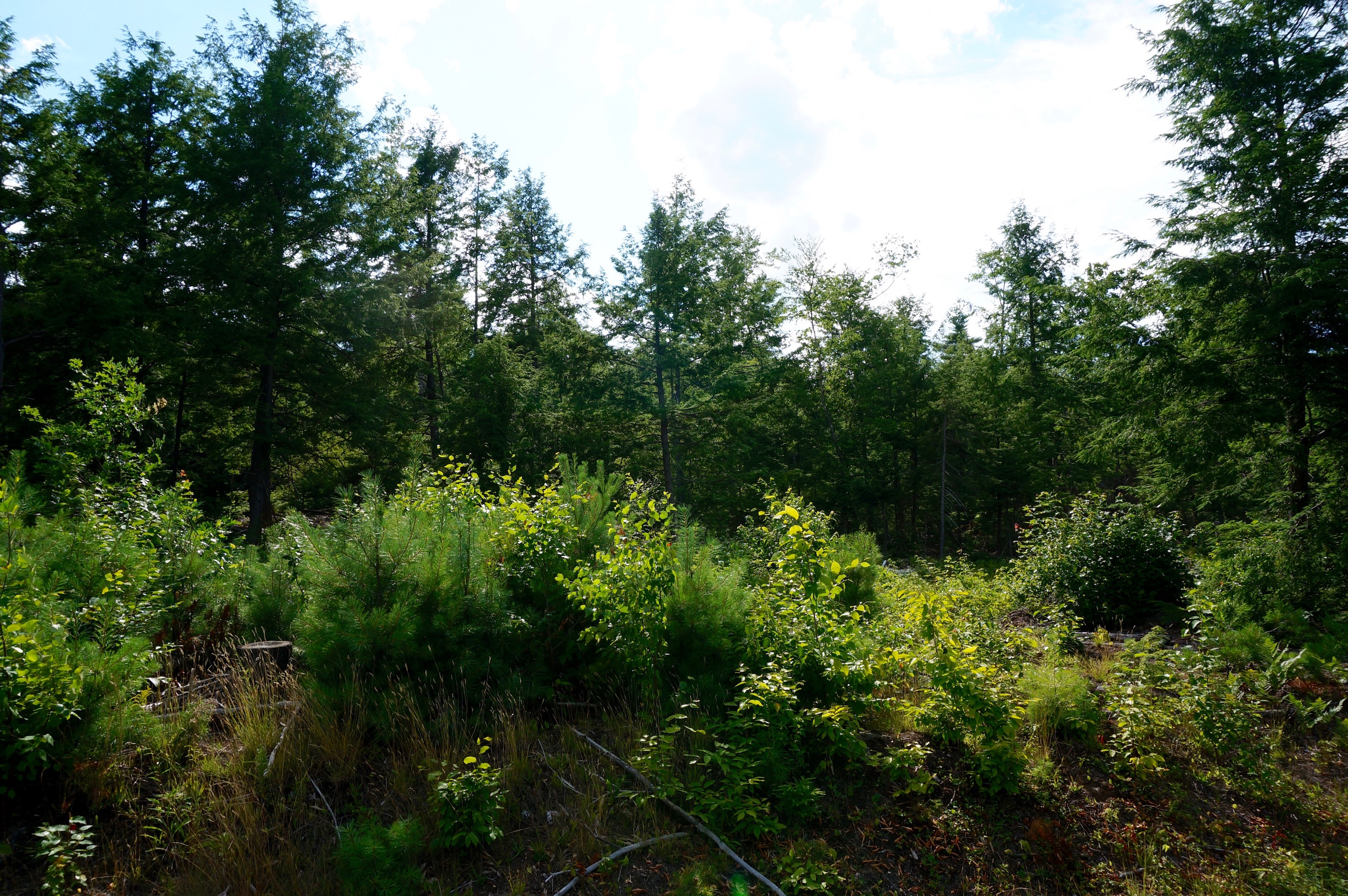 Land for Sale at Lot 7 Woodhill Drive, Wilmot Wilmot, New Hampshire, 03287 United States