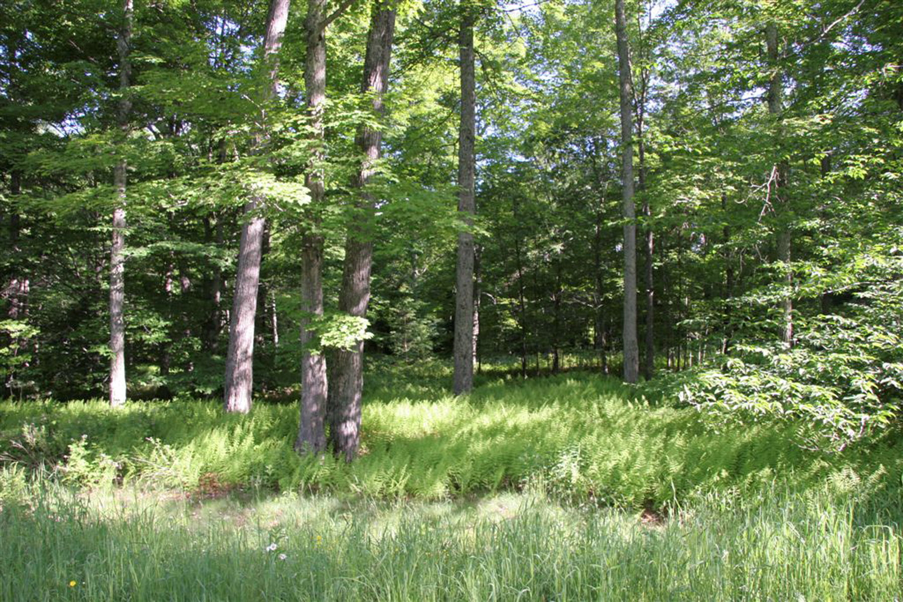 Land for Sale at Owls Head 5 Owl's Head Ln Stowe, Vermont 05672 United States