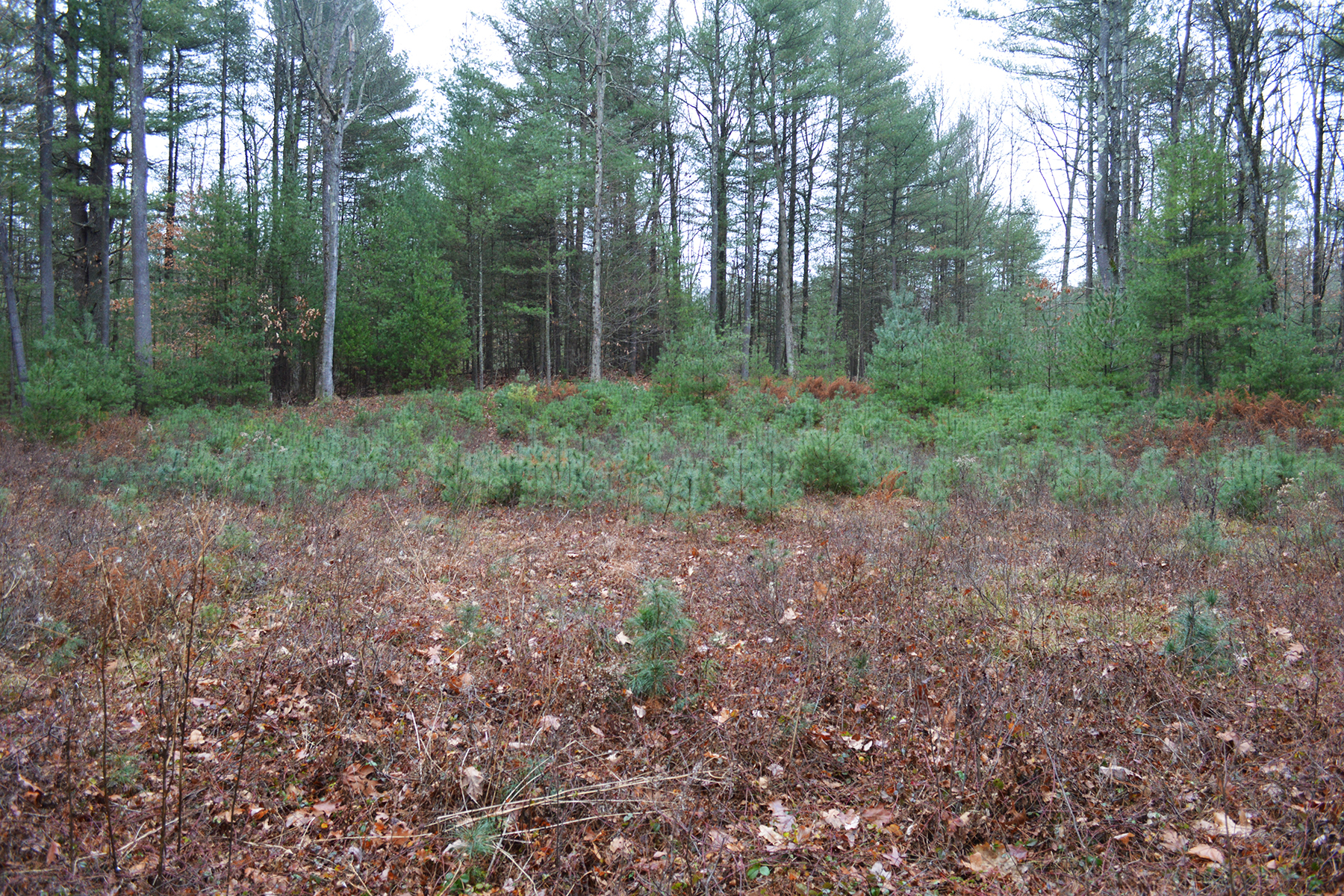 Additional photo for property listing at Excellent Wilton Building Lot 155  Edie Rd Saratoga Springs, New York 12866 United States