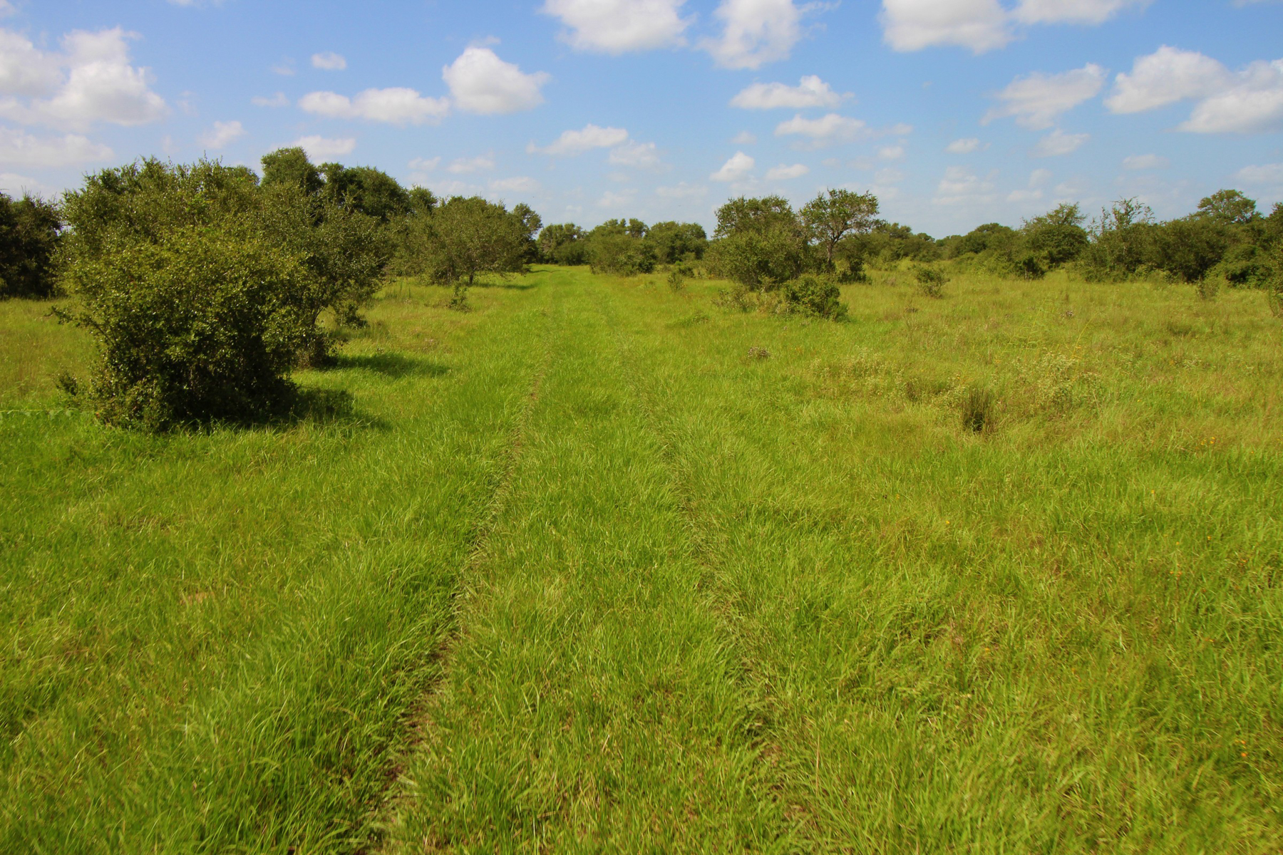 Additional photo for property listing at 894+/- Acrew Tri-County Ranch 894+/- AC / Tri-County Ranch ou Victoria, Texas 77901 Estados Unidos