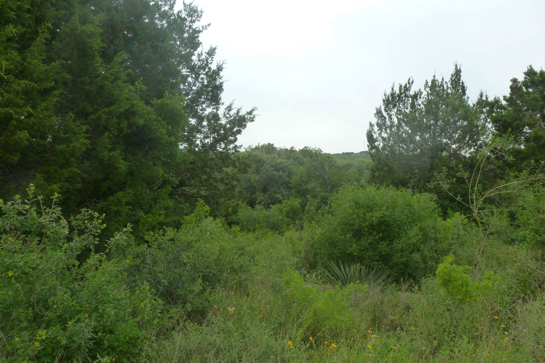 Land for Sale at Fantastic Lot in Selma Lot 12 Ventura Selma, Texas 78154 United States
